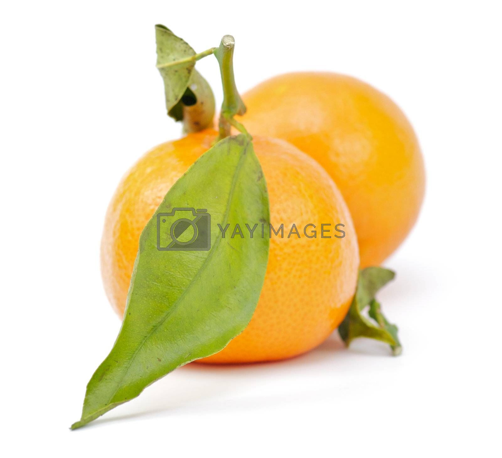 Two tangerines with green leaves on white background