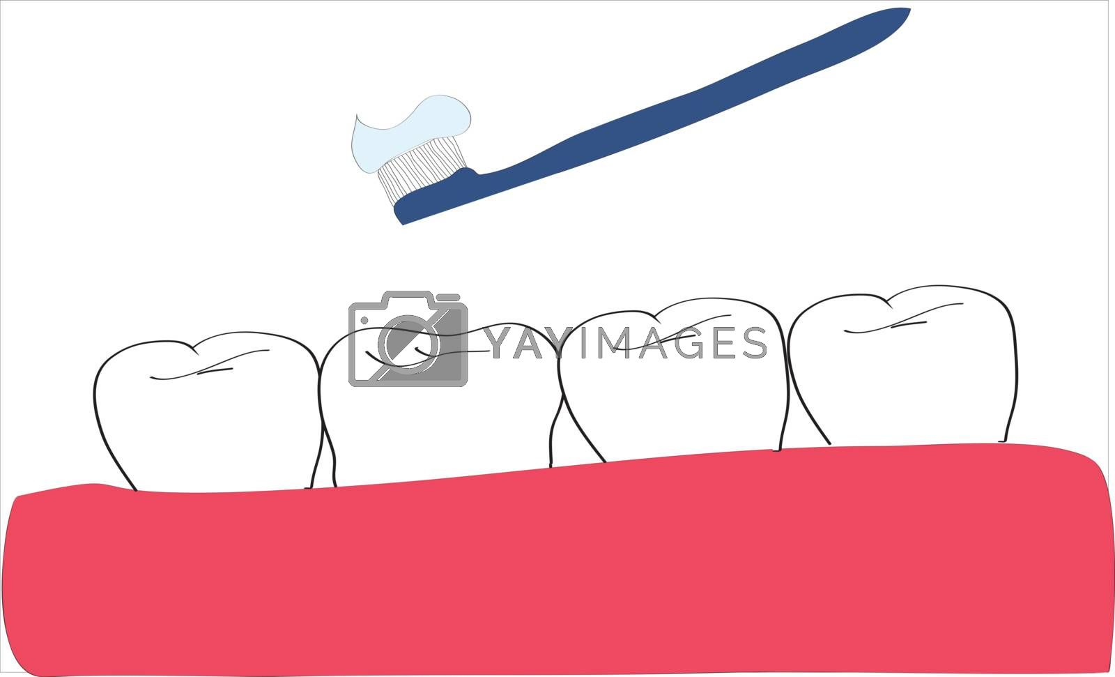 Teeth and tooth brush with paste on a white background