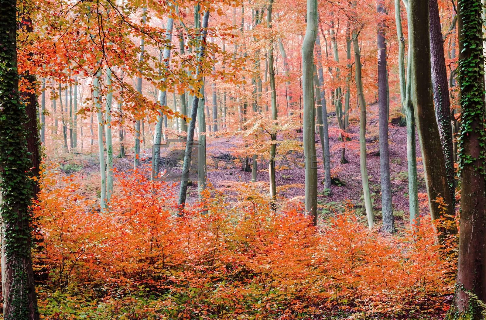 forest with vibrant fall colors