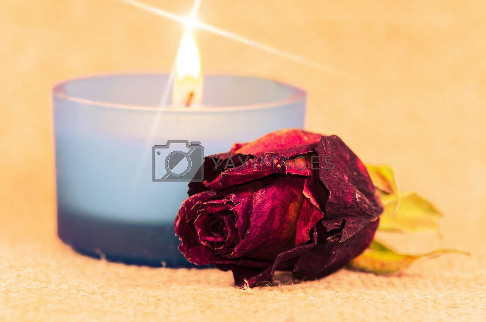 faded rose,candle in the background