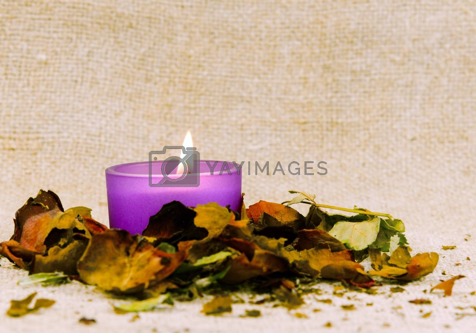 candle light , dried flower petal