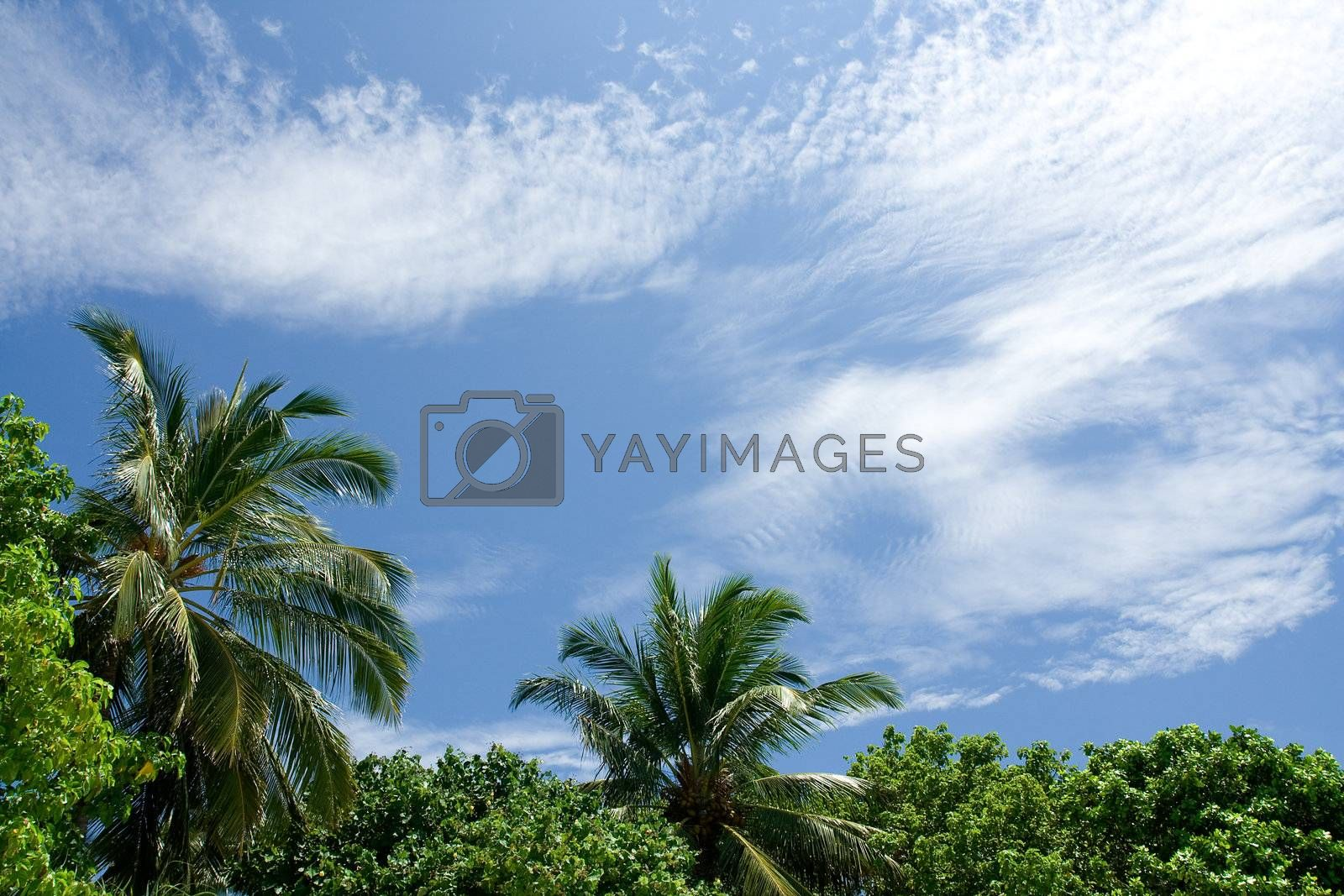 Lying on the beach and looking at the top of palm trees and blue tropical sky
