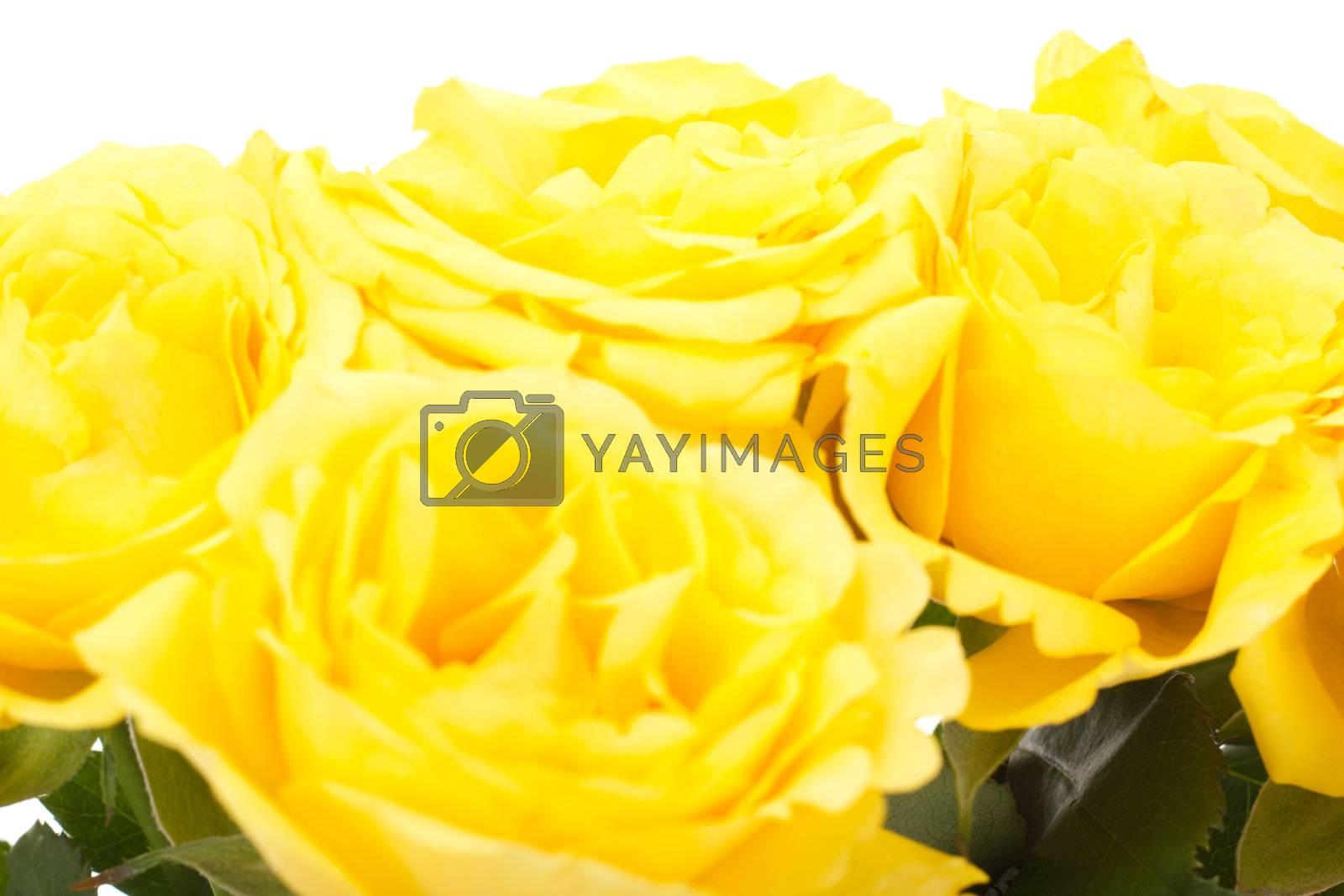 Beautiful bunch of yellow roses