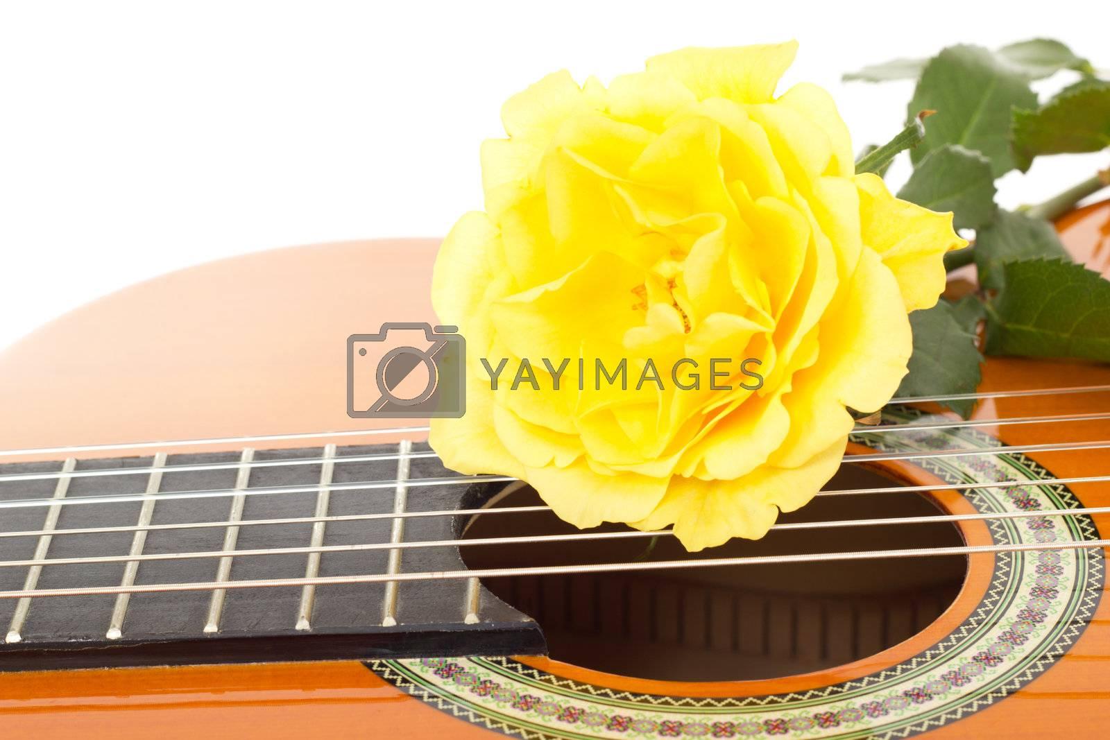 Beautiful yellow rose on guitar