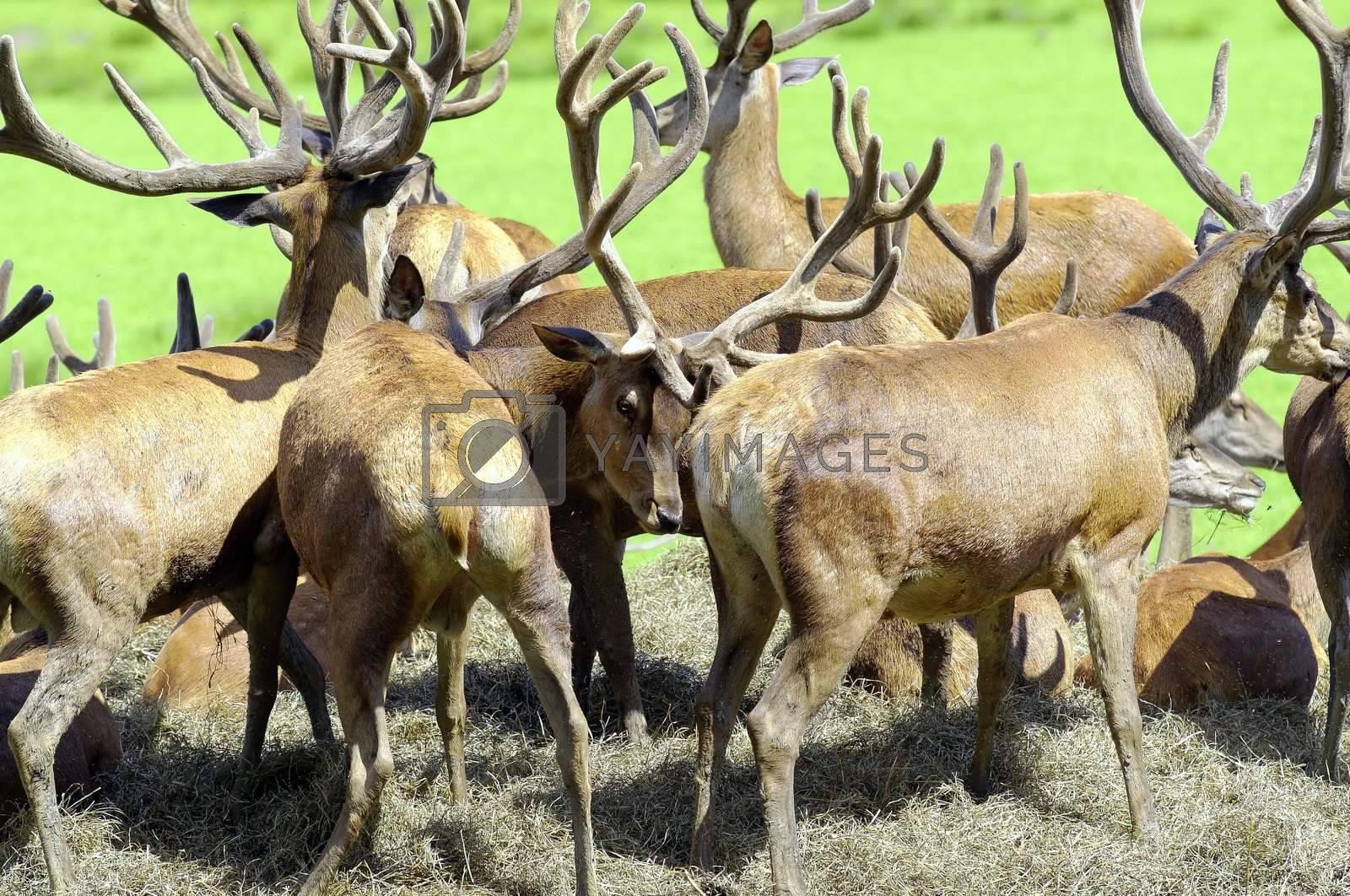 deer herd in a park