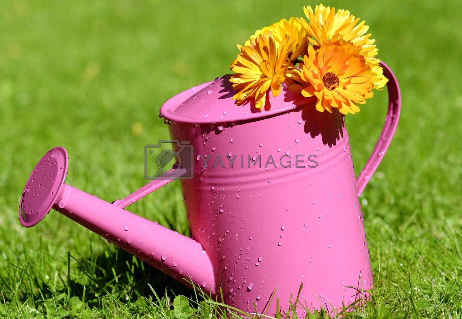 watering can covered with flowers