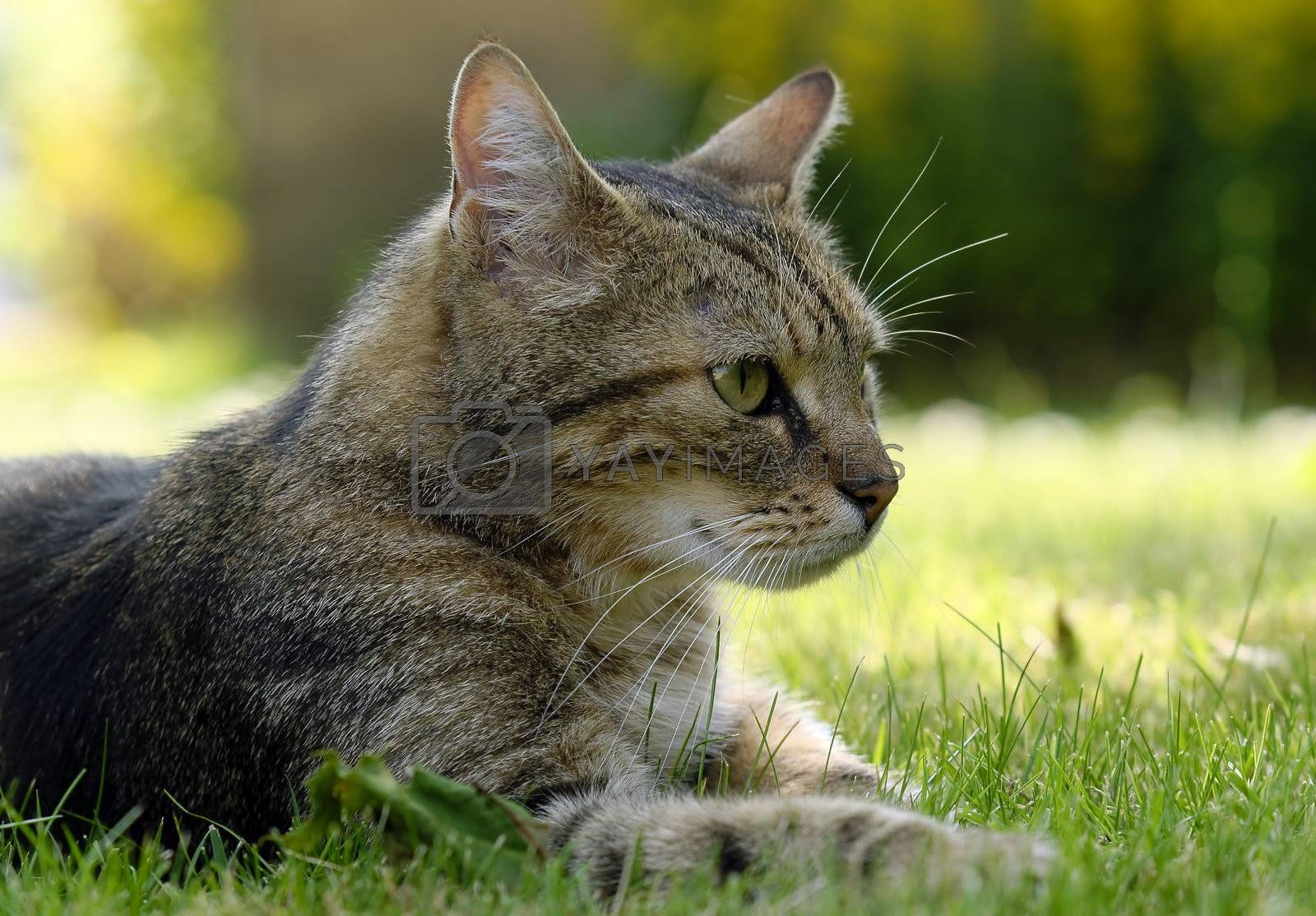 a cat lying in the grass