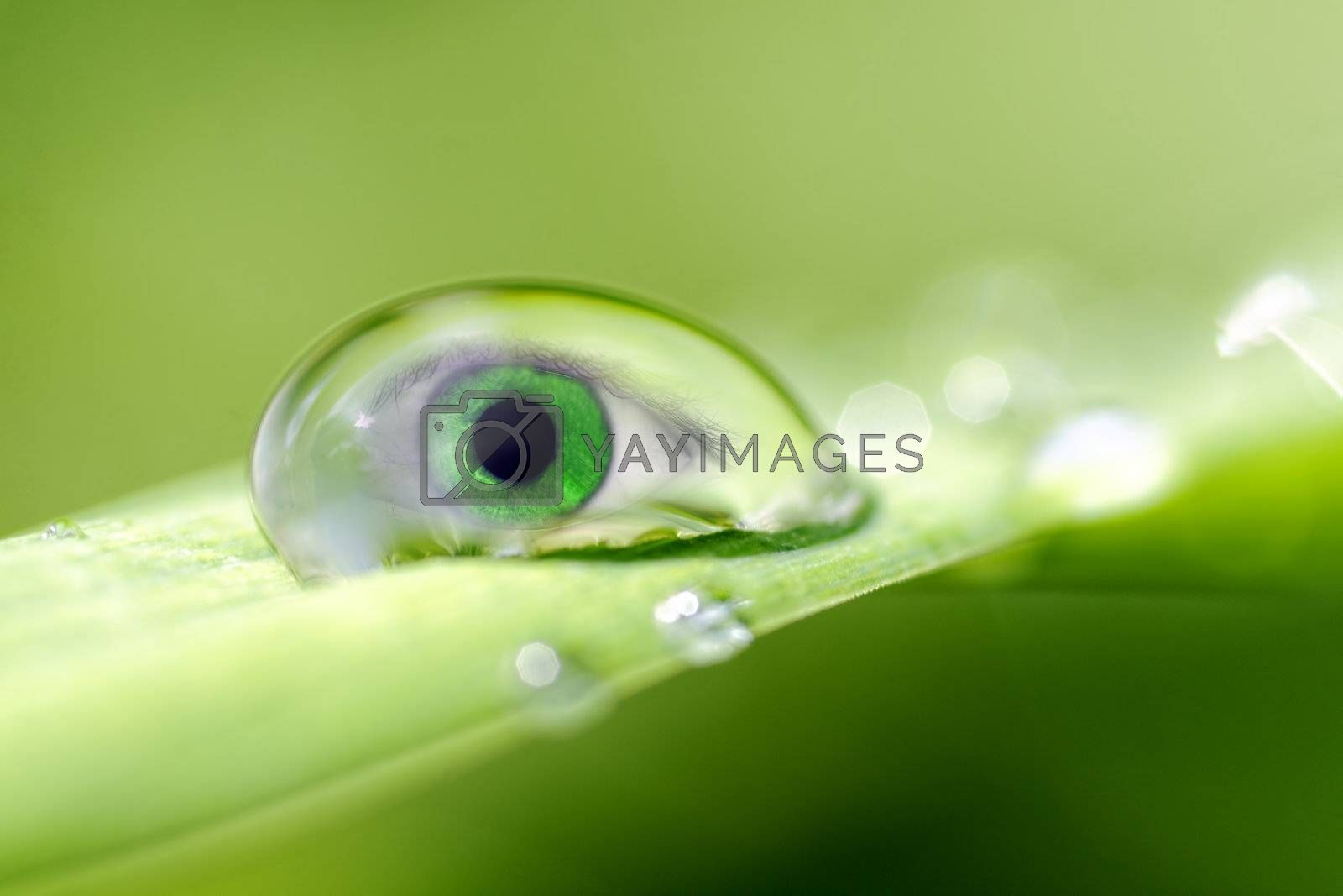 an eye inside a drop of dew