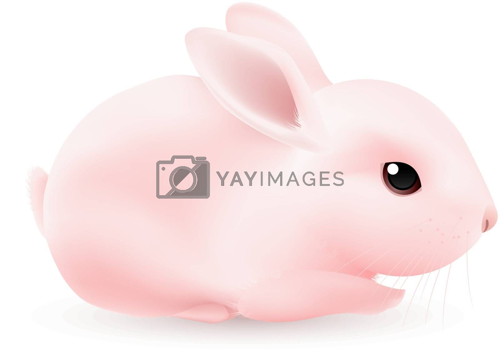 Pink Rabbit. Illustration on white background for design
