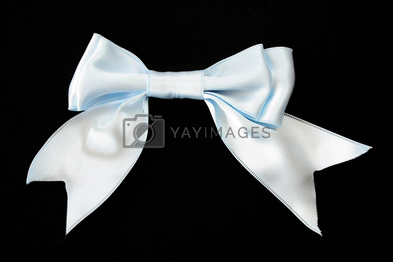 Baby blue bow on a black background.