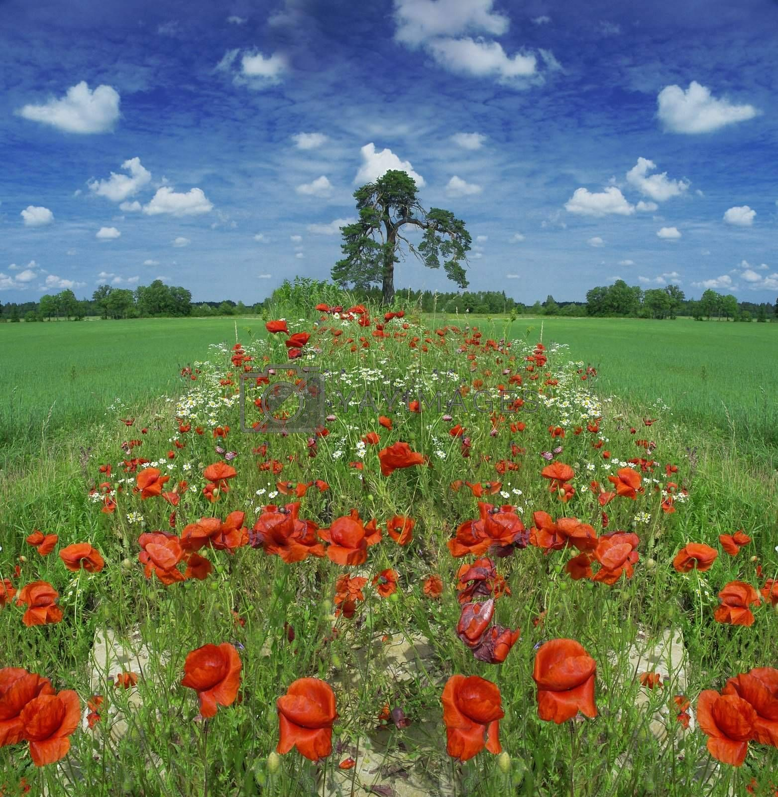 The picturesque dark dark blue sky with clouds a meadow and blossoming red poppies in the foreground. A collage.