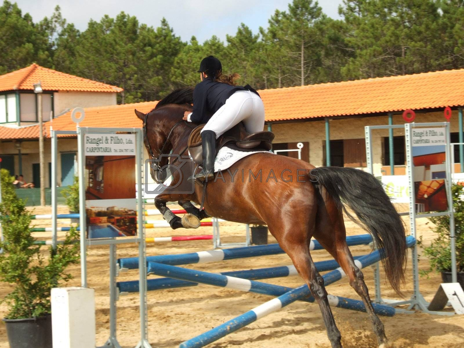 Horse jump by PauloResende