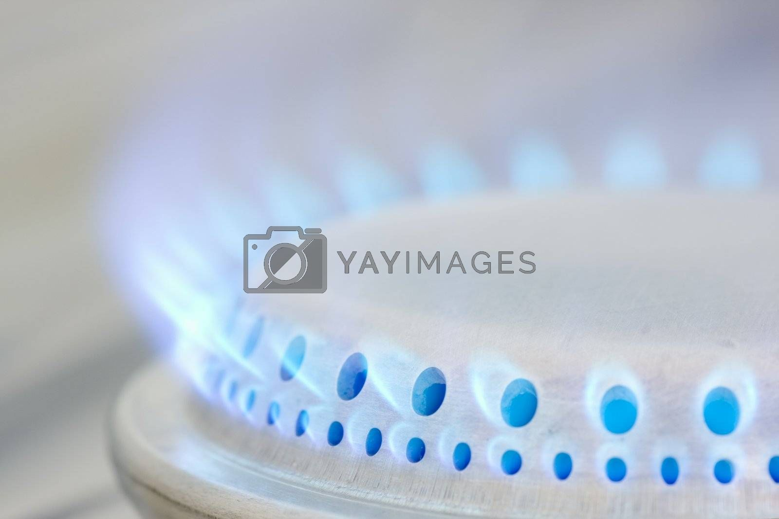 Blue flames of a gas stove.