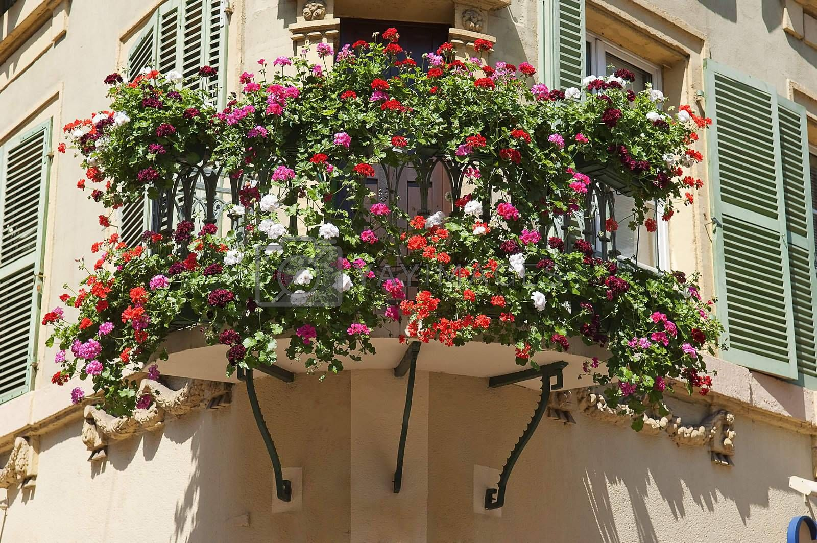 Flowers in the city of Colmar France