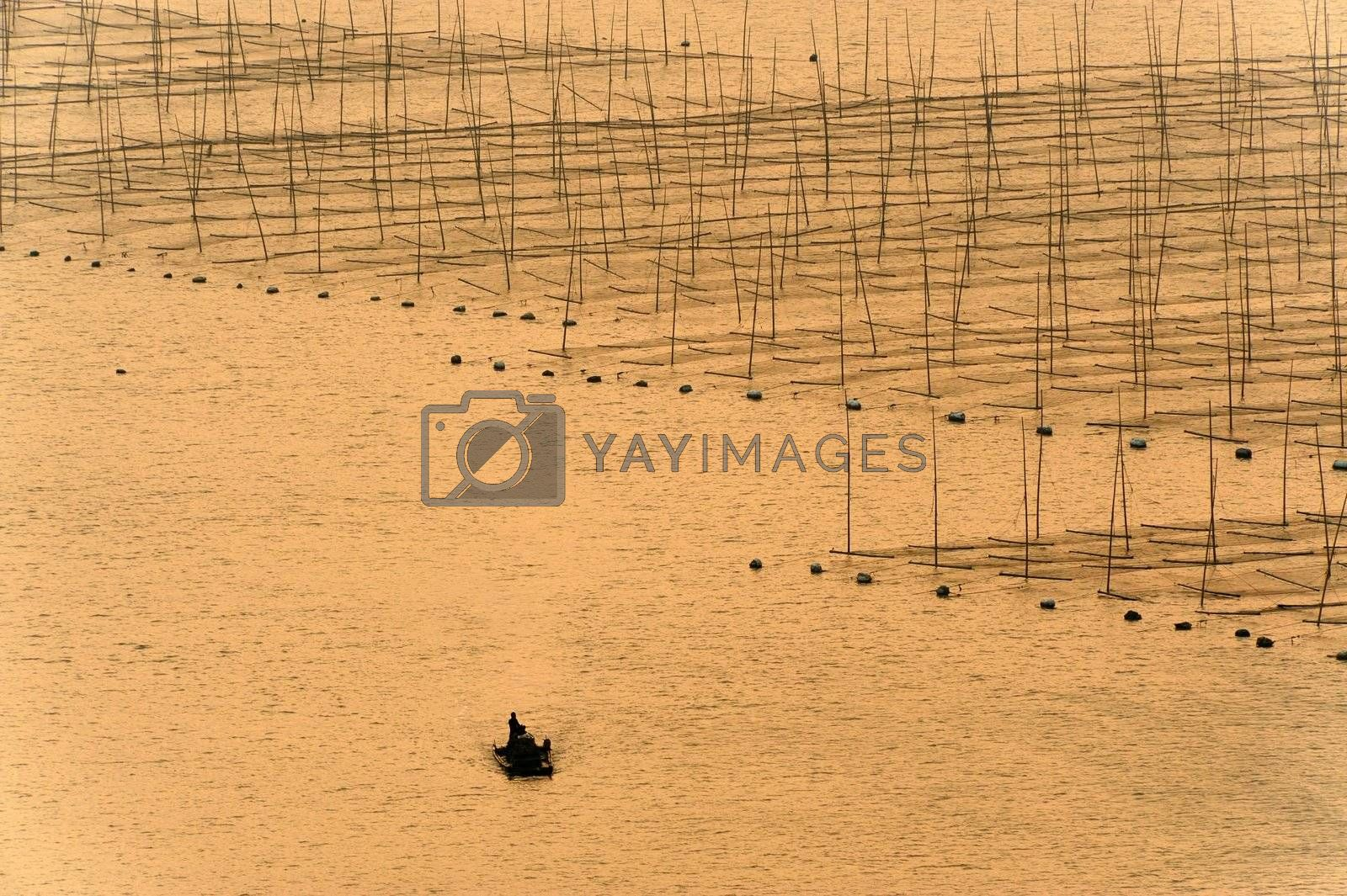 Seaweed farm and boats in the ocean at sunset in Fujian province of China