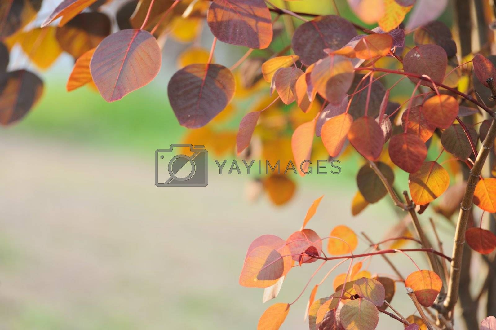 Colorful leaves by raywoo