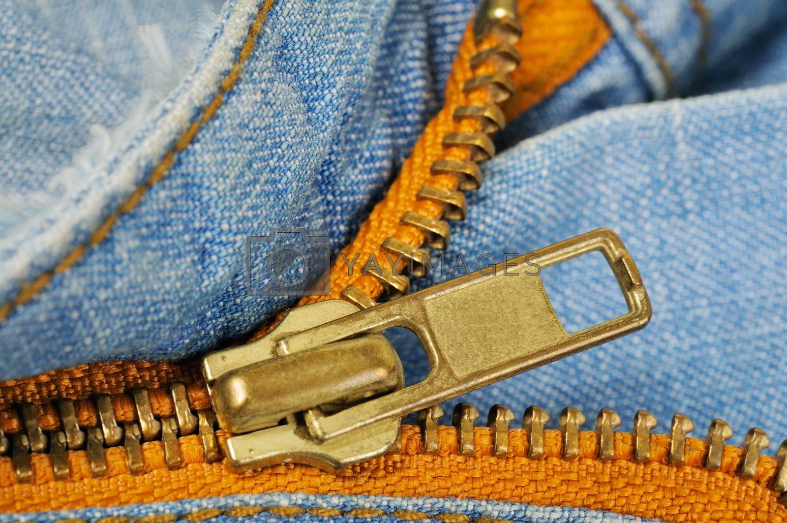 Zipper on the blue indigo jeans. Macro photo.