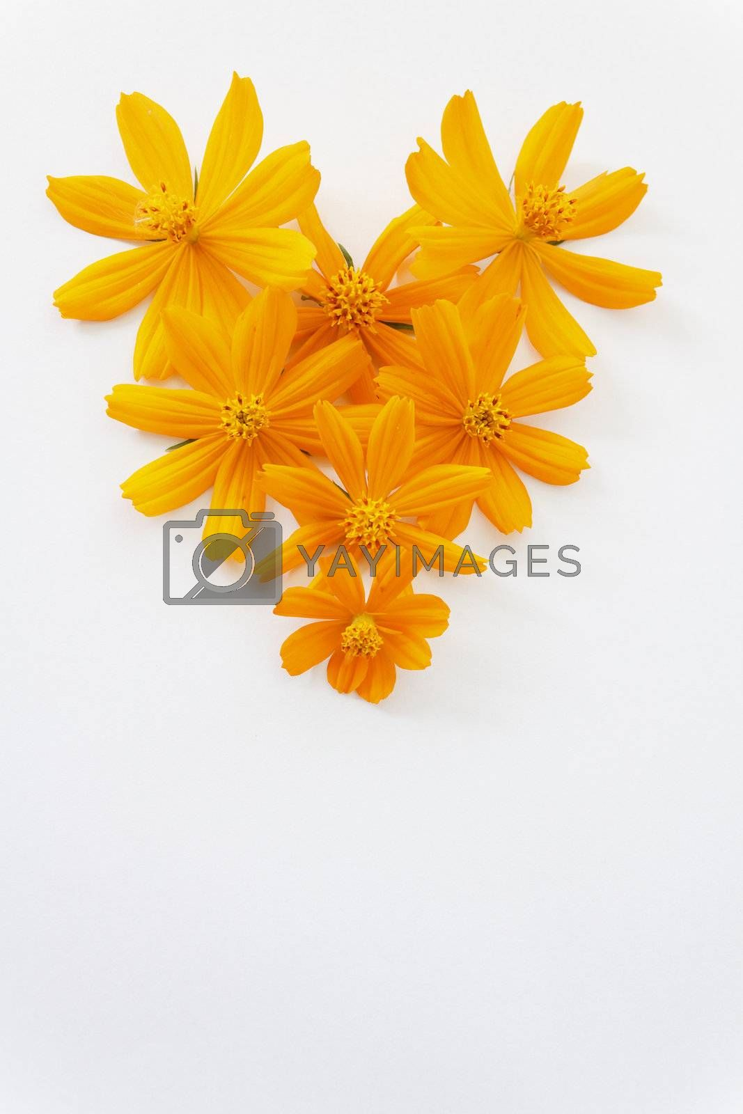 High angle view flowers in heart shape