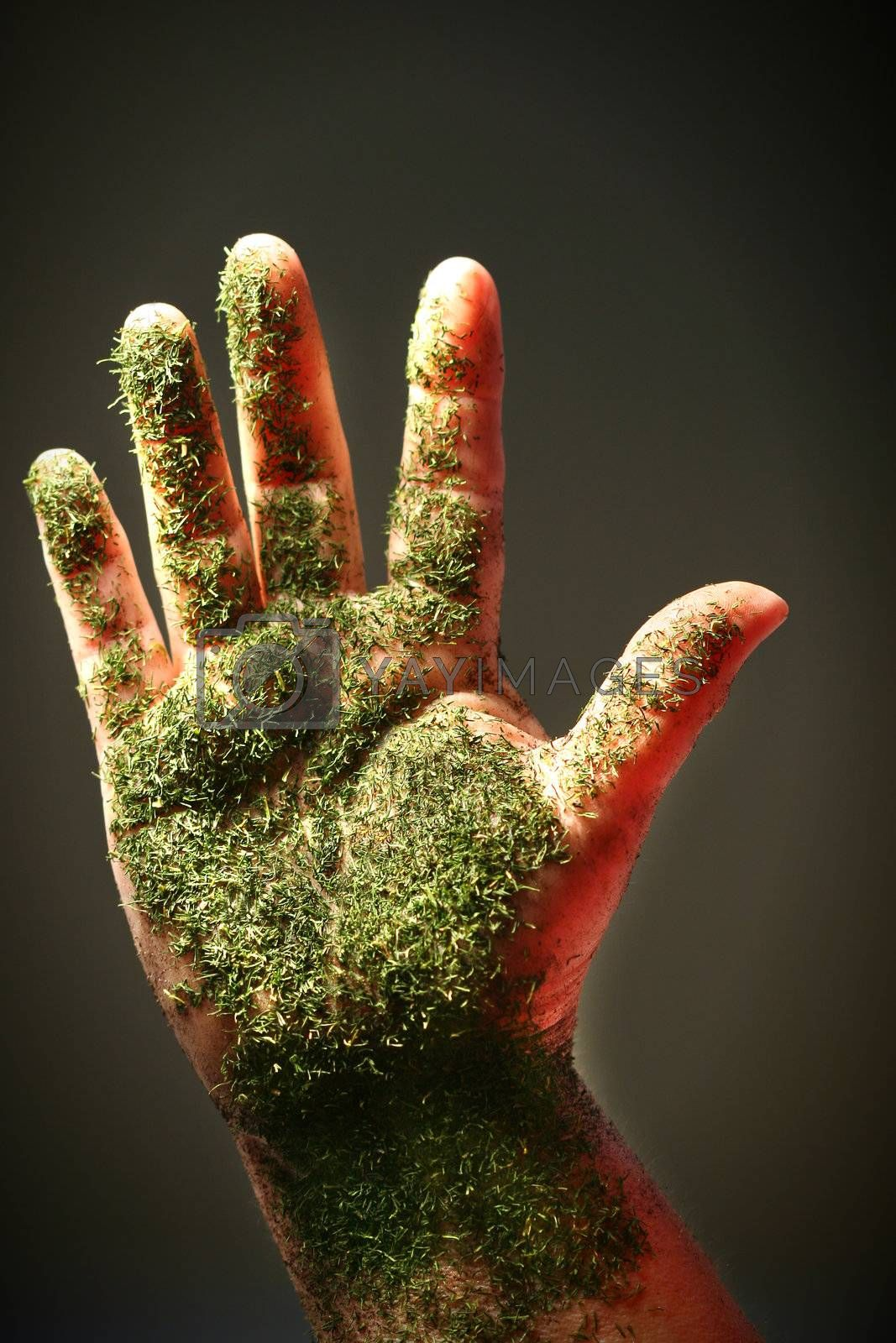 Open hand with green substance, close-up