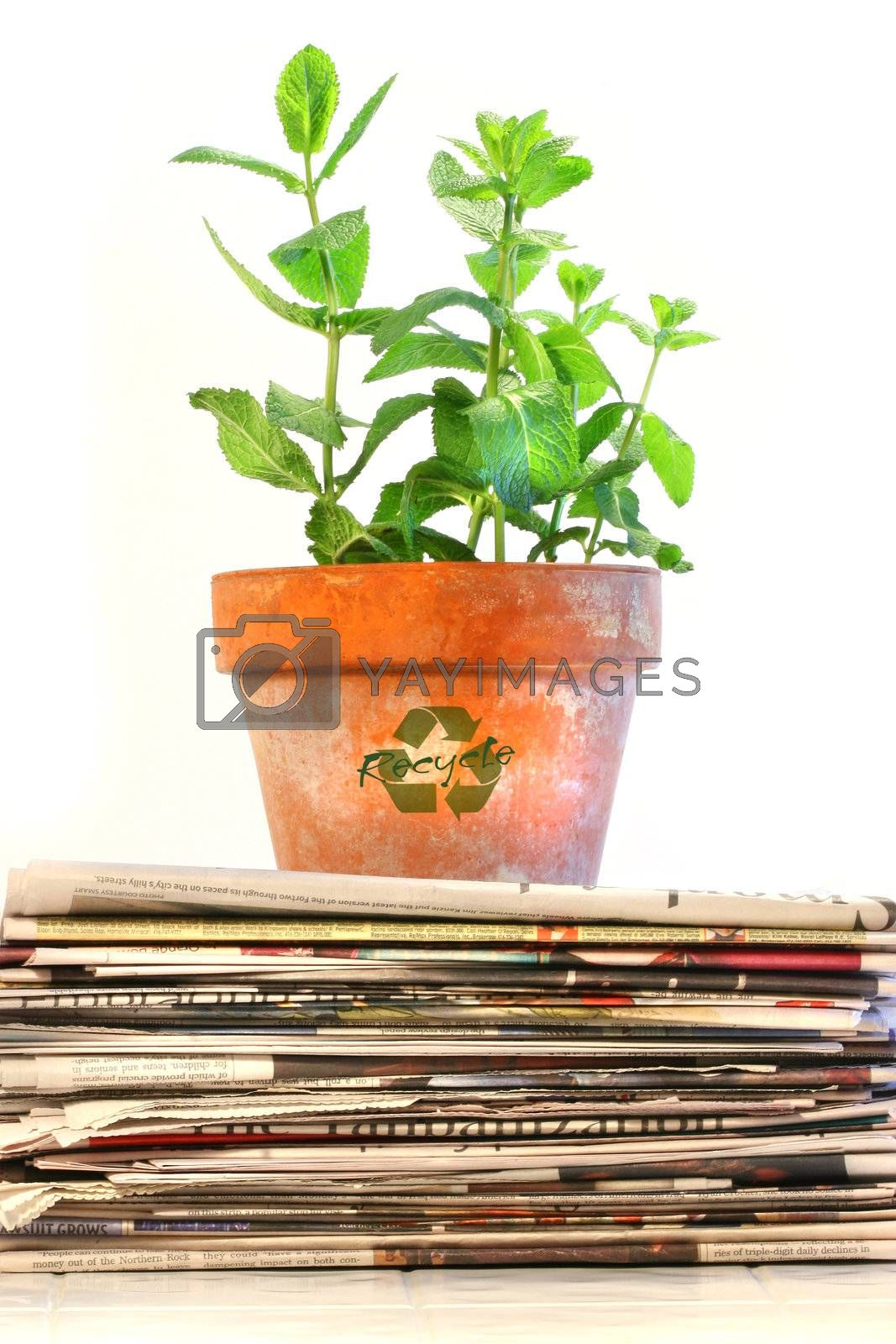 Potted plant on a stack of newspapers against white background