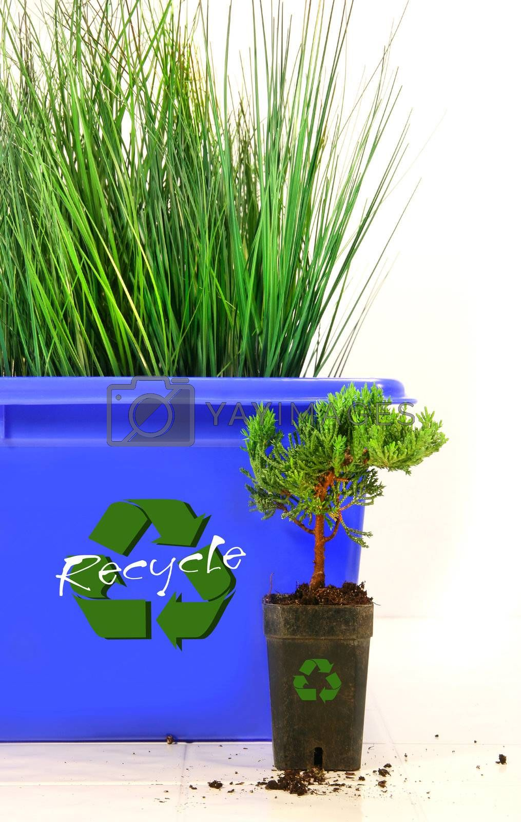 Tall grass inside recycle bin against wite background