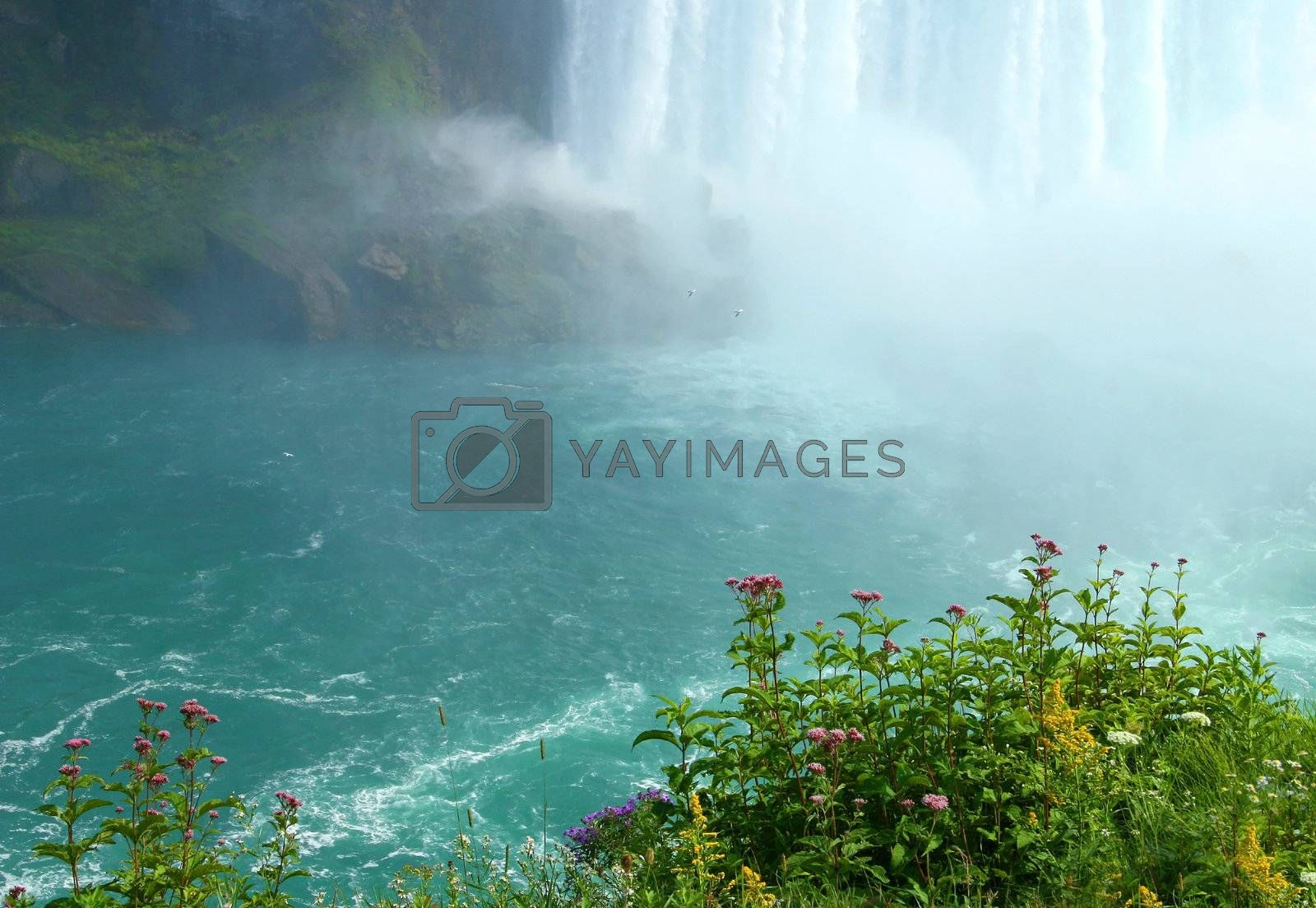 Cliff view with wild flowers overlooking Niagara falls
