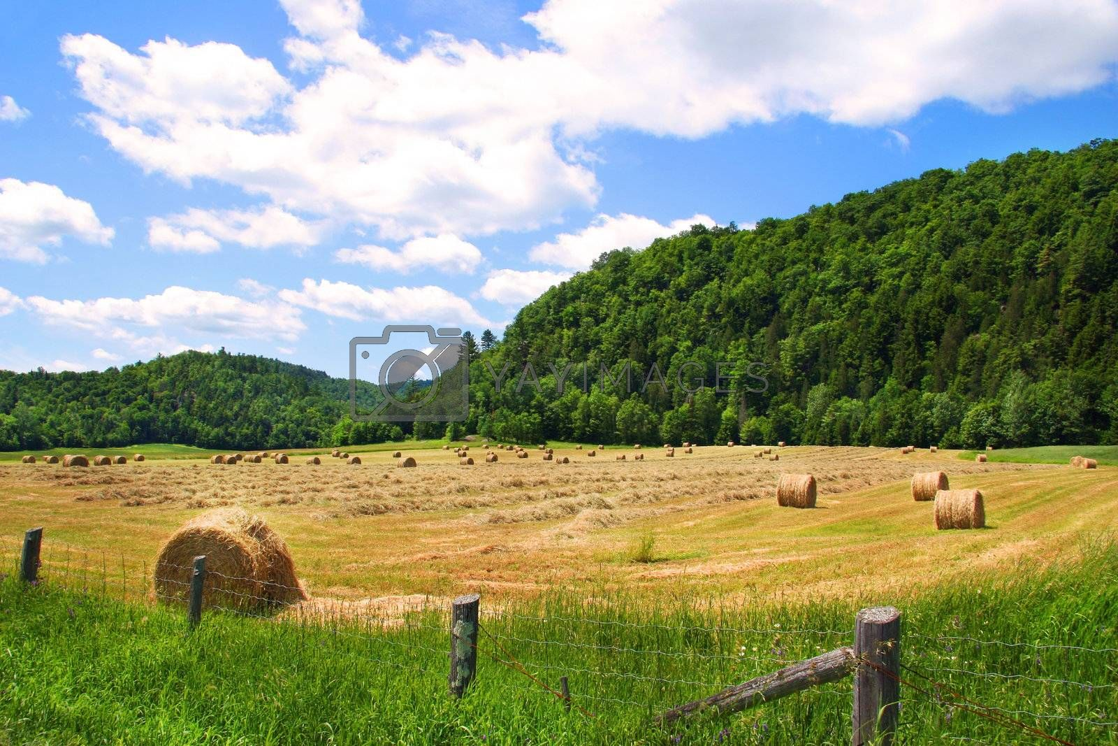 Harvestiing the hay in August