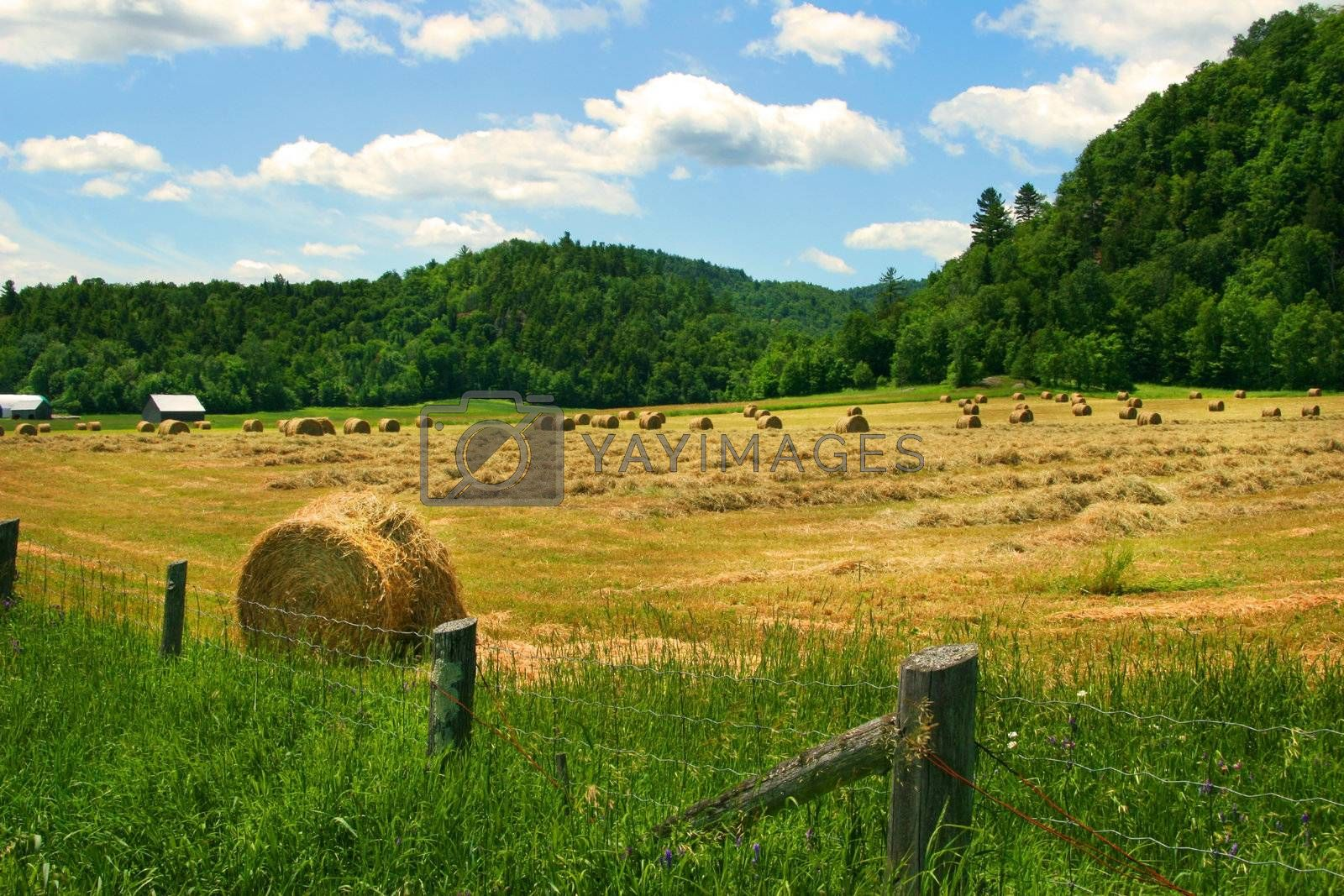 Hay cutting time in the Laurentiens, Quebec
