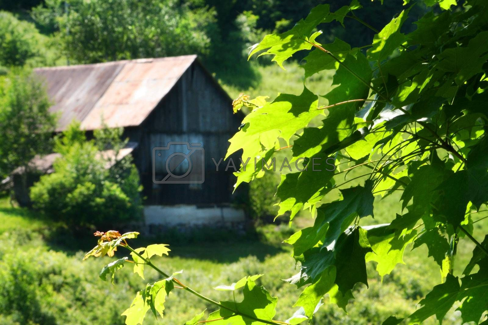 Old barn on the hill