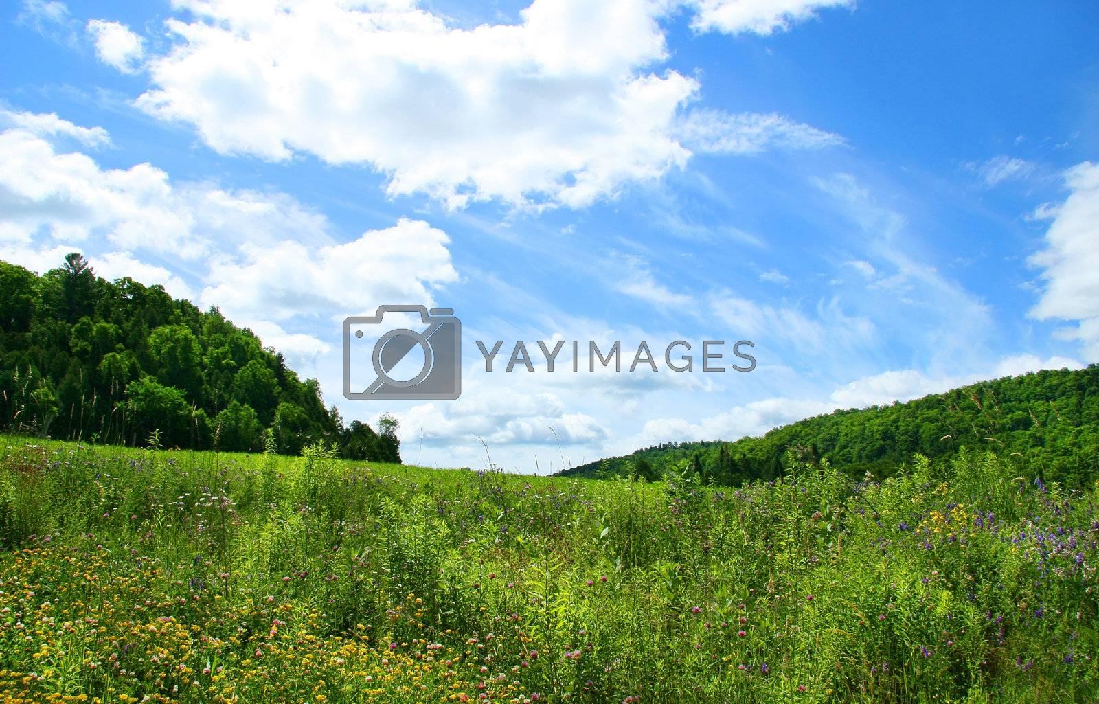 Wild flowers of summer