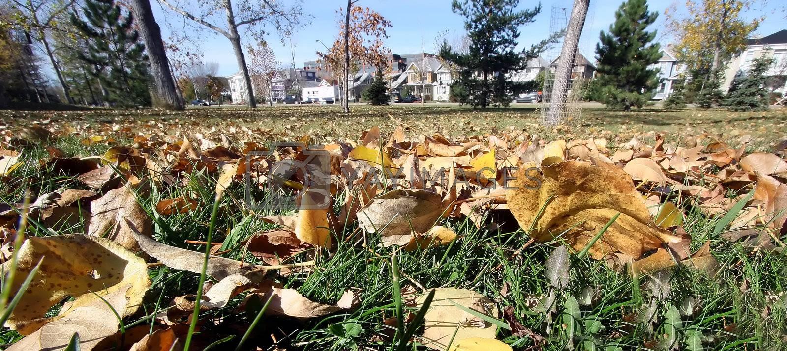 """Low angle image """"Season Fall"""""""