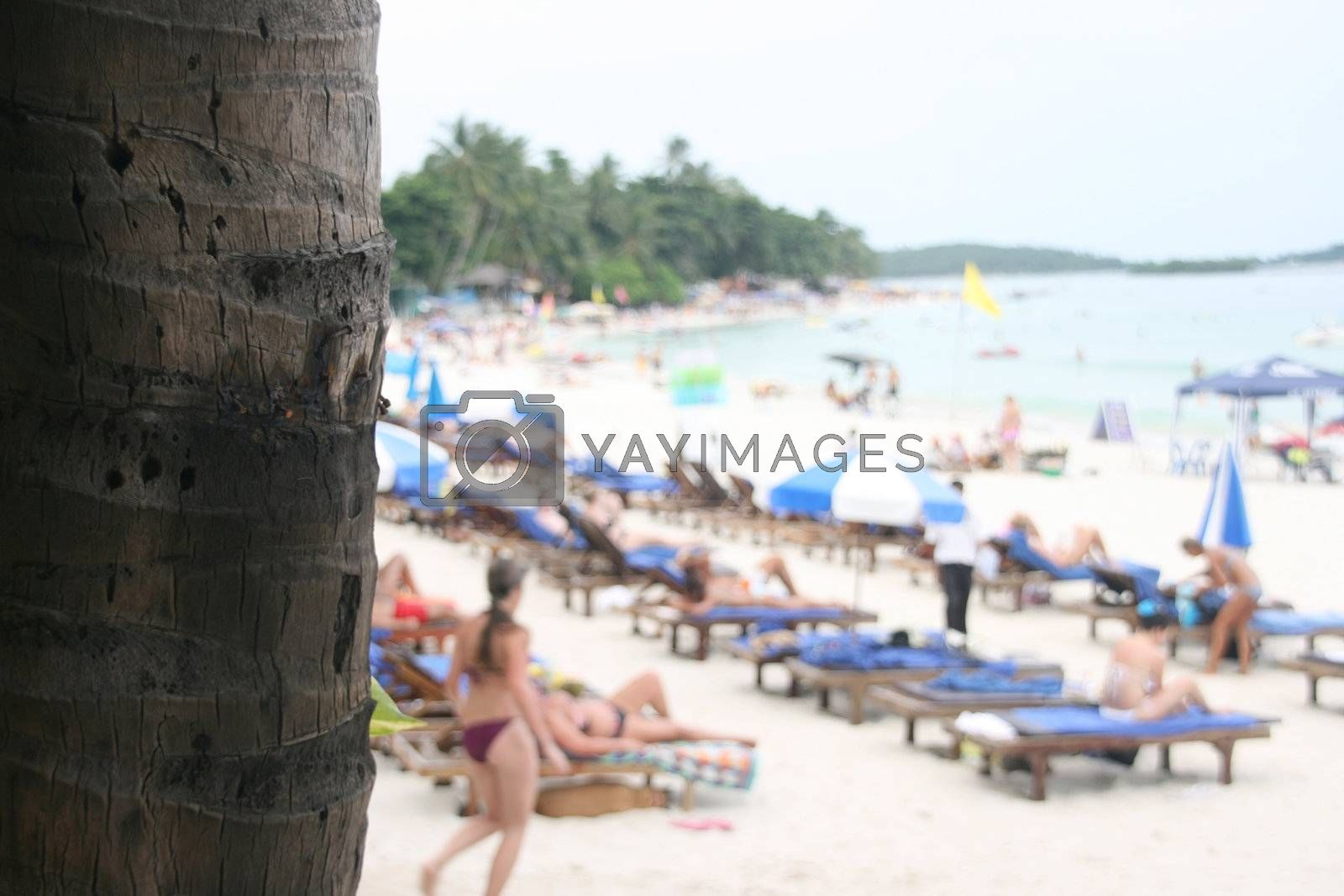 palm tree and beach by forwardcom