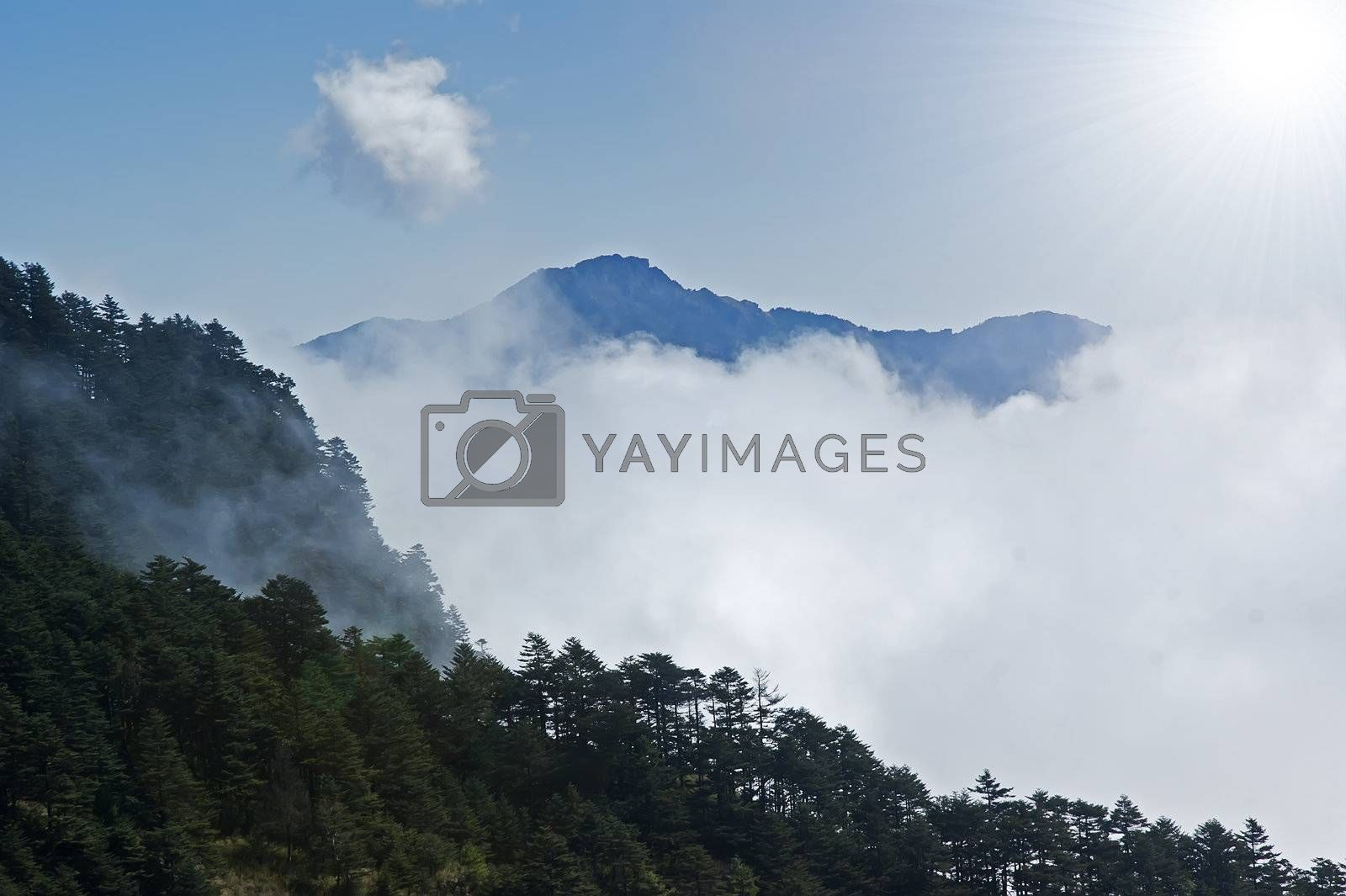 This photo was taken in China Shennongjia, in late autumn