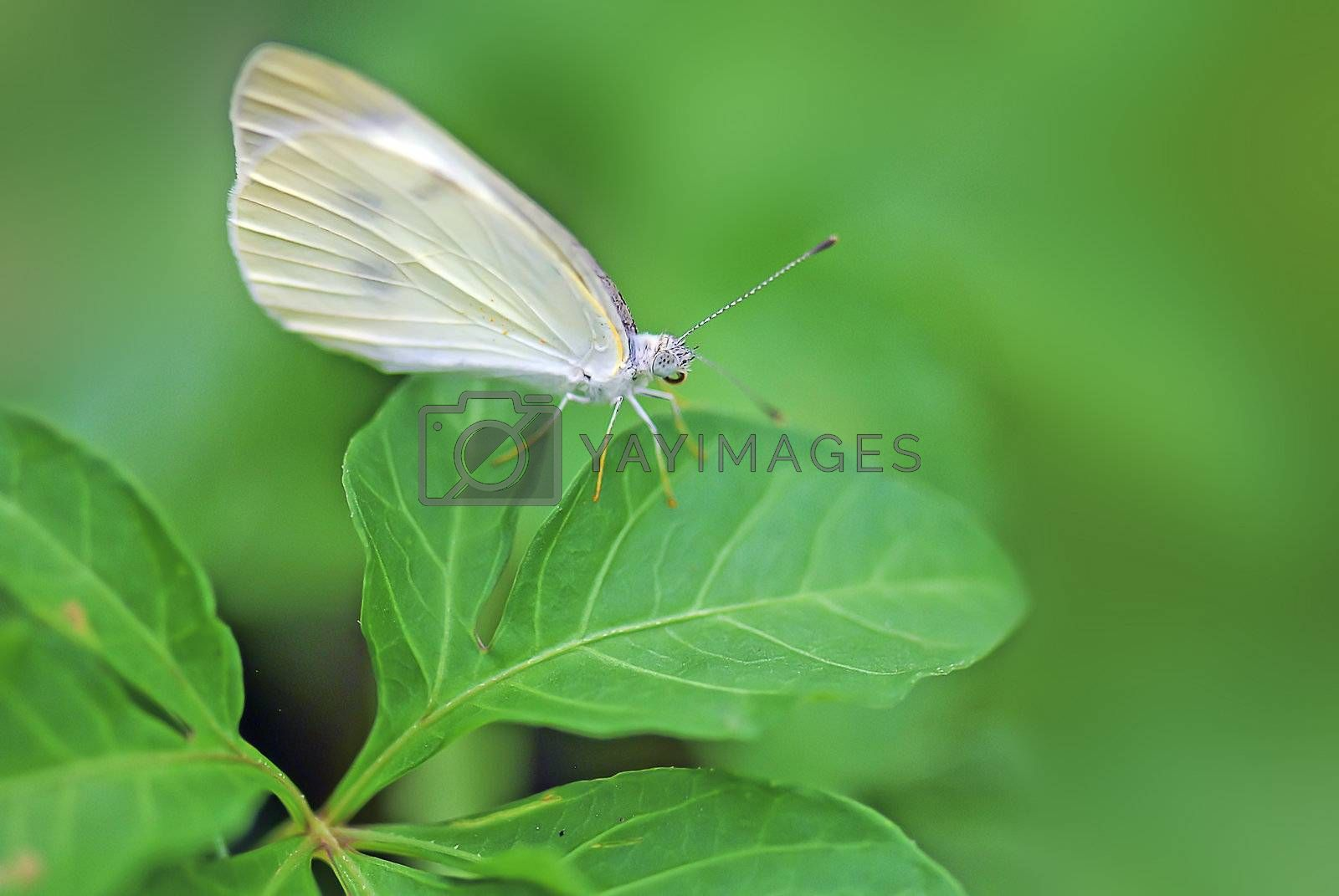 The butterfly stopped in the grass