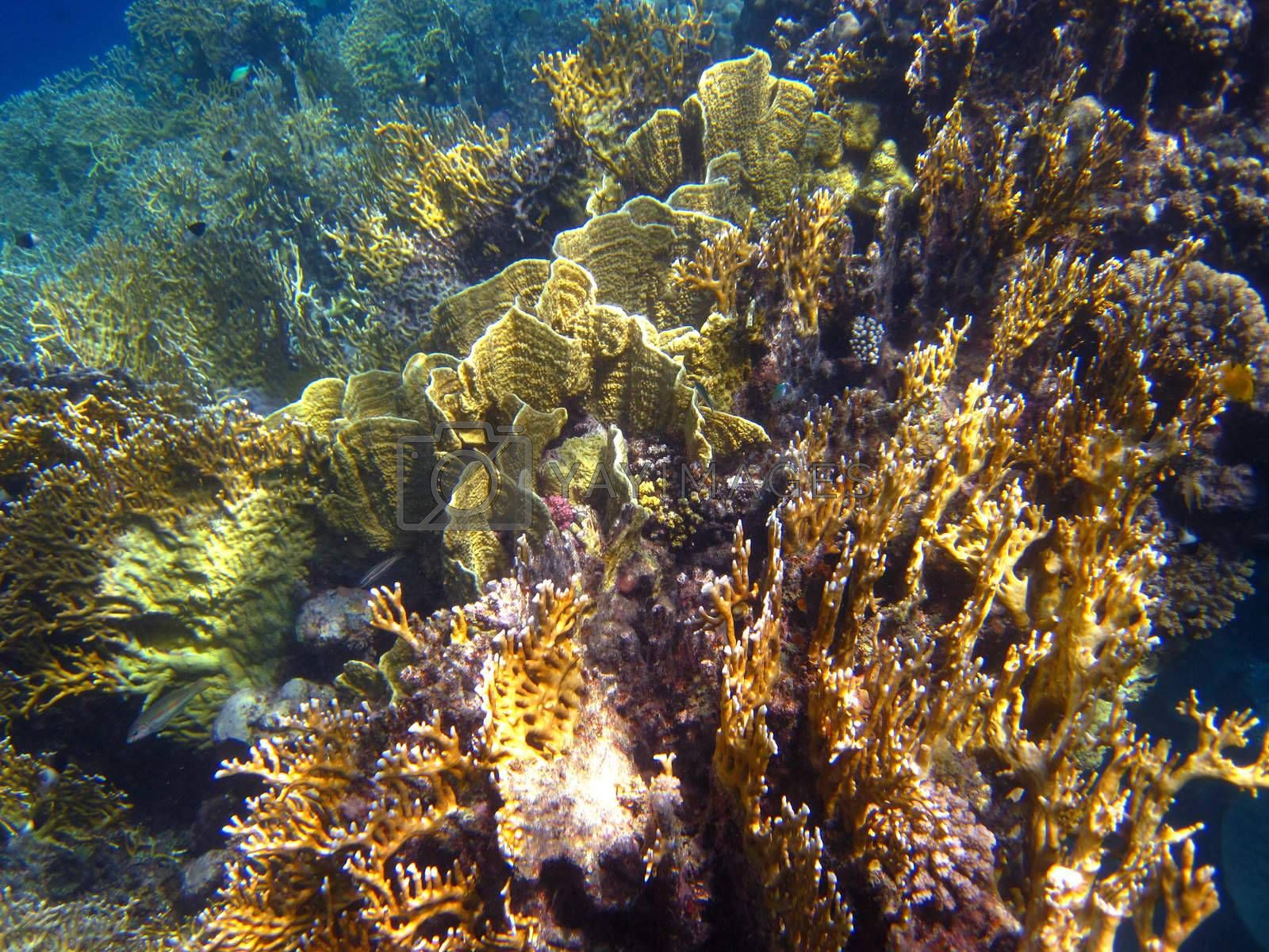 Beautiful colorful coral reef species rich in the red sea egypt