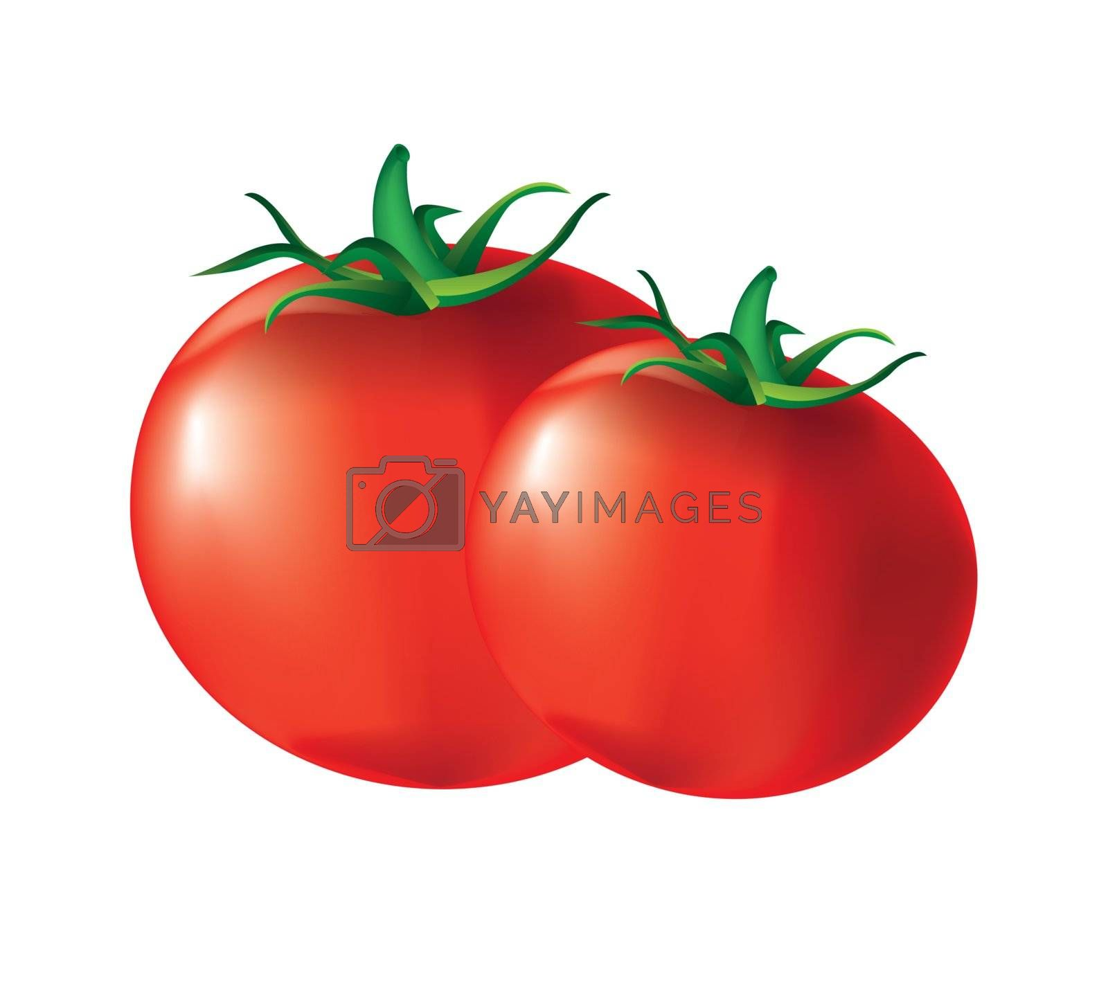 two tomatoes in the foreground  over white background