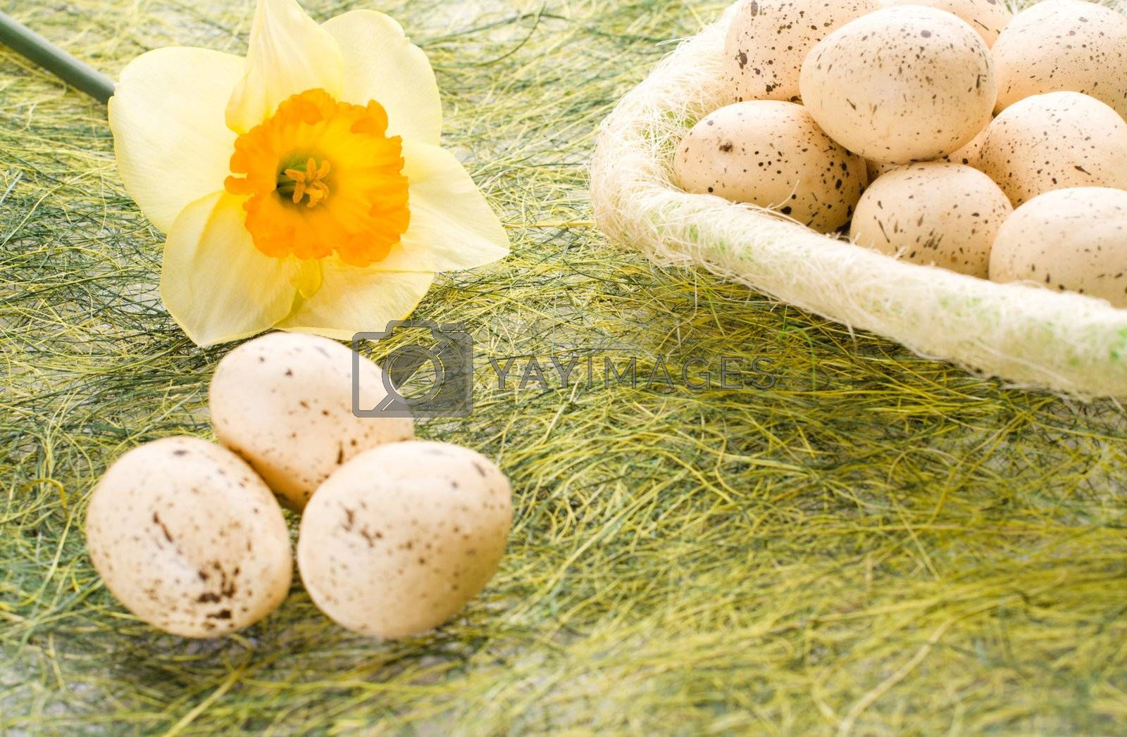 Daffodil and full basket with decorated speckled easter eggs