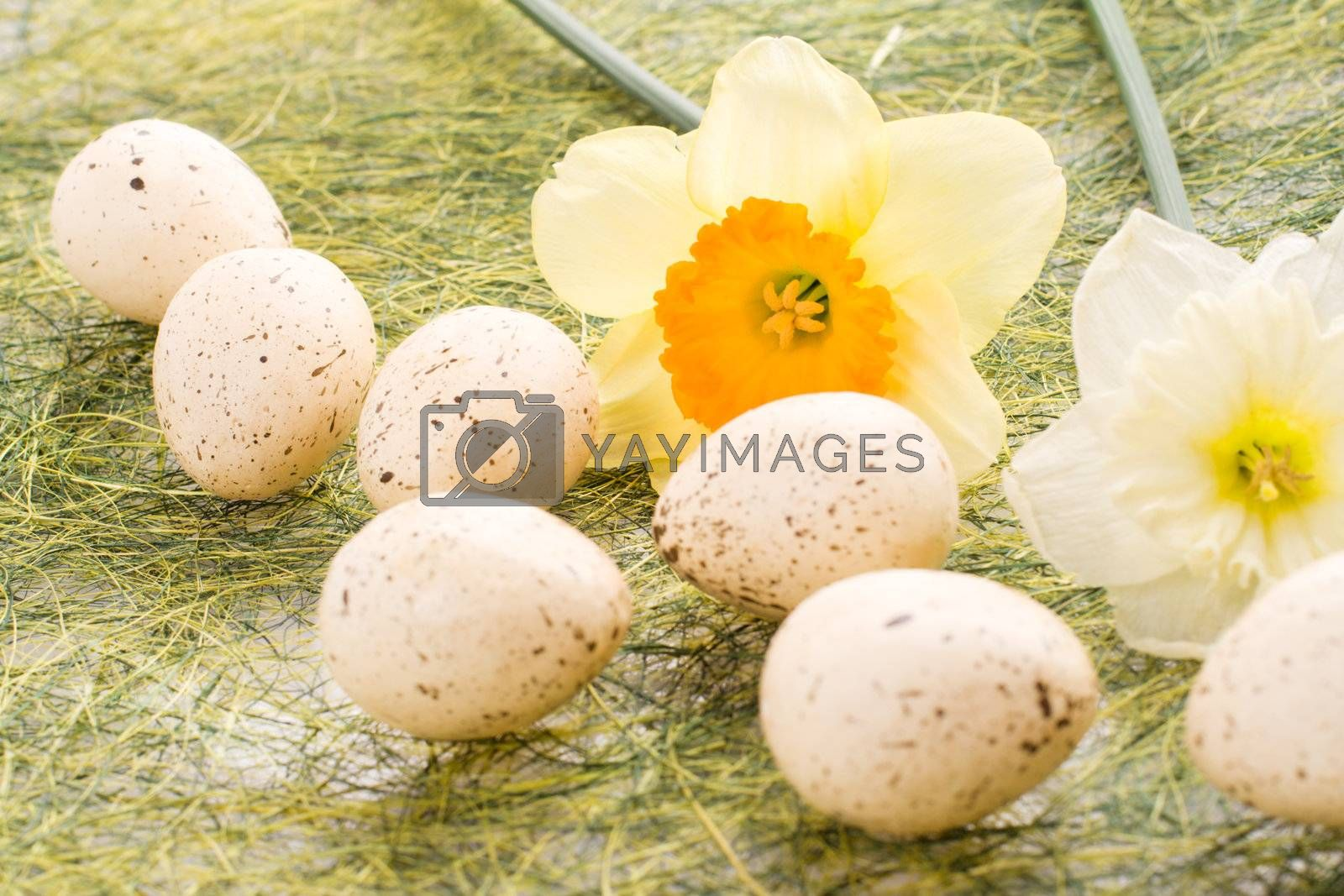 Daffodil and decorated speckled easter eggs
