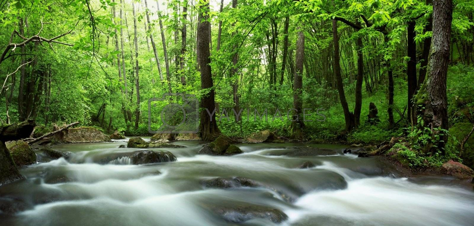 An image of a river in green forest