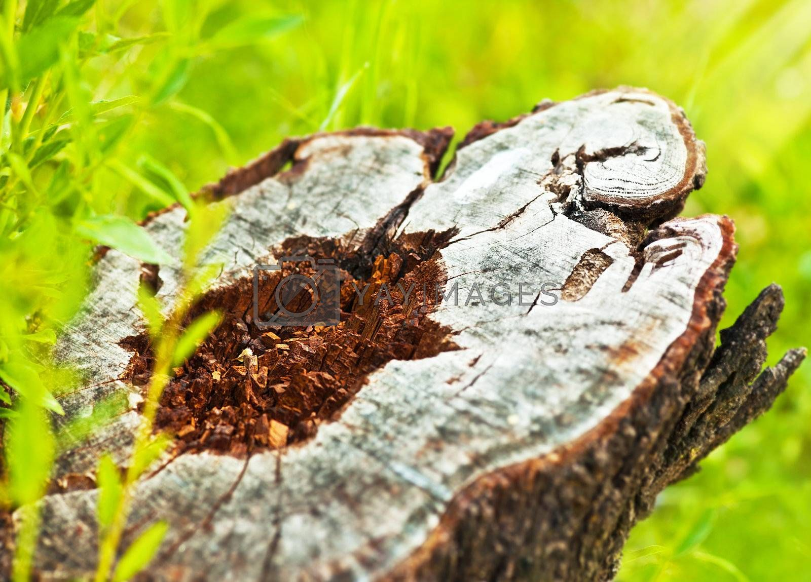 Deforestation, dead tree stump, save nature and protect earth, conceptual image of environmental damage and forest pollution