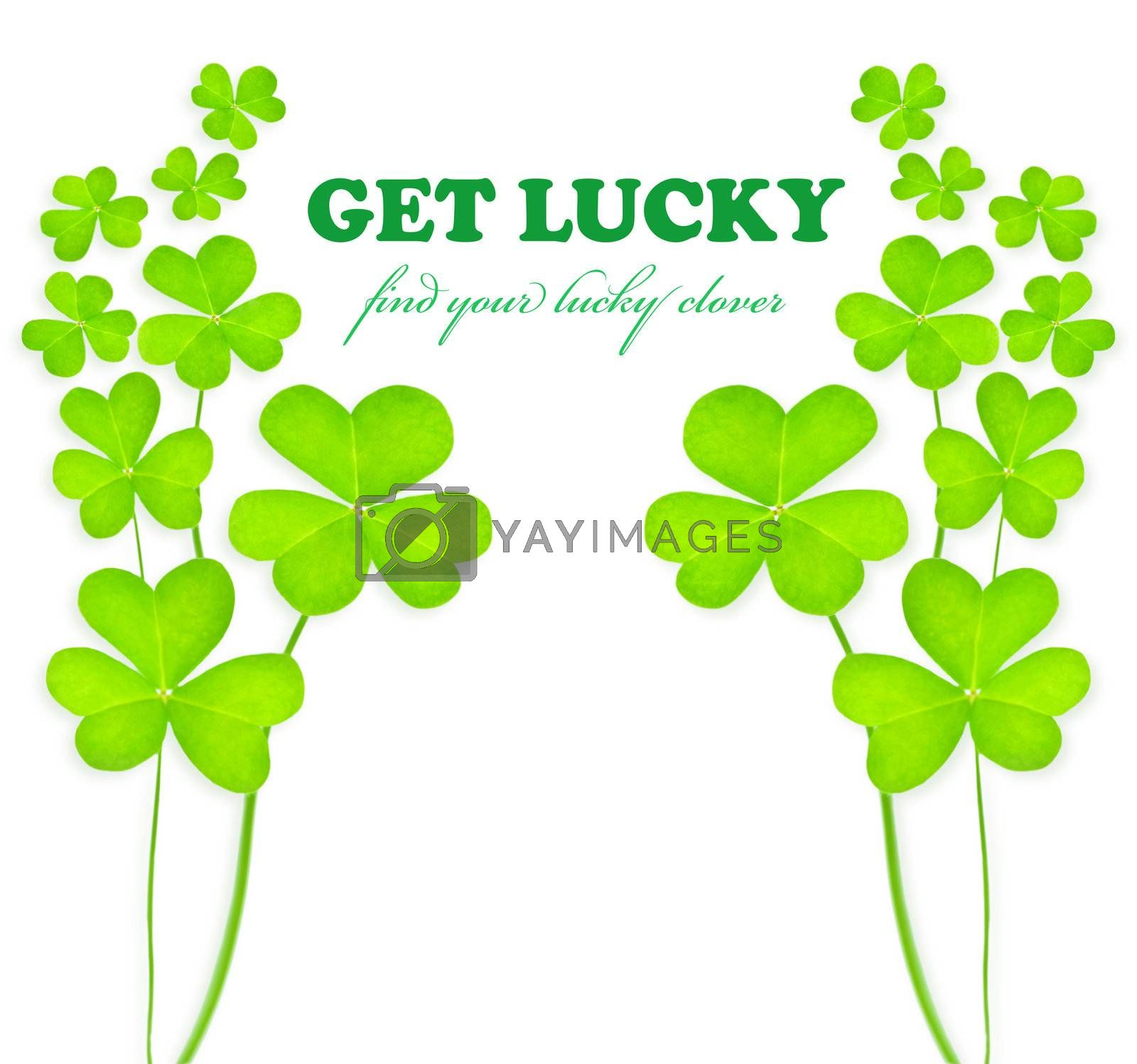 Green clover holiday frame, st.Patrick's day decoration isolated on white background with text space