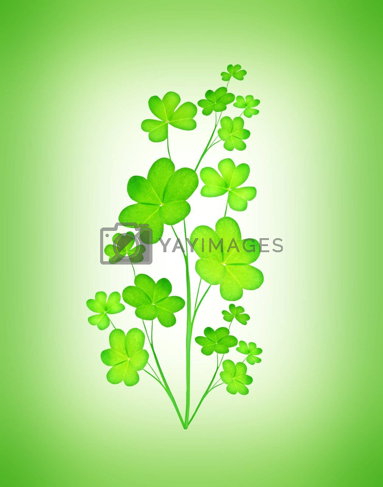 Green clover holiday plant, st.Patrick's day decoration isolated on green background with text space