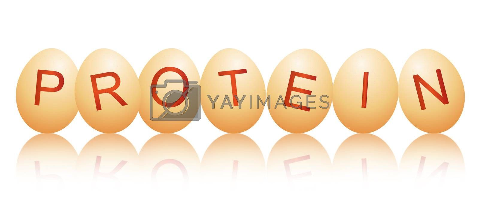 Illustration depicting a row of chicken eggs with letters spelling the word PROTEIN arranged over white and reflecting into the foreground.