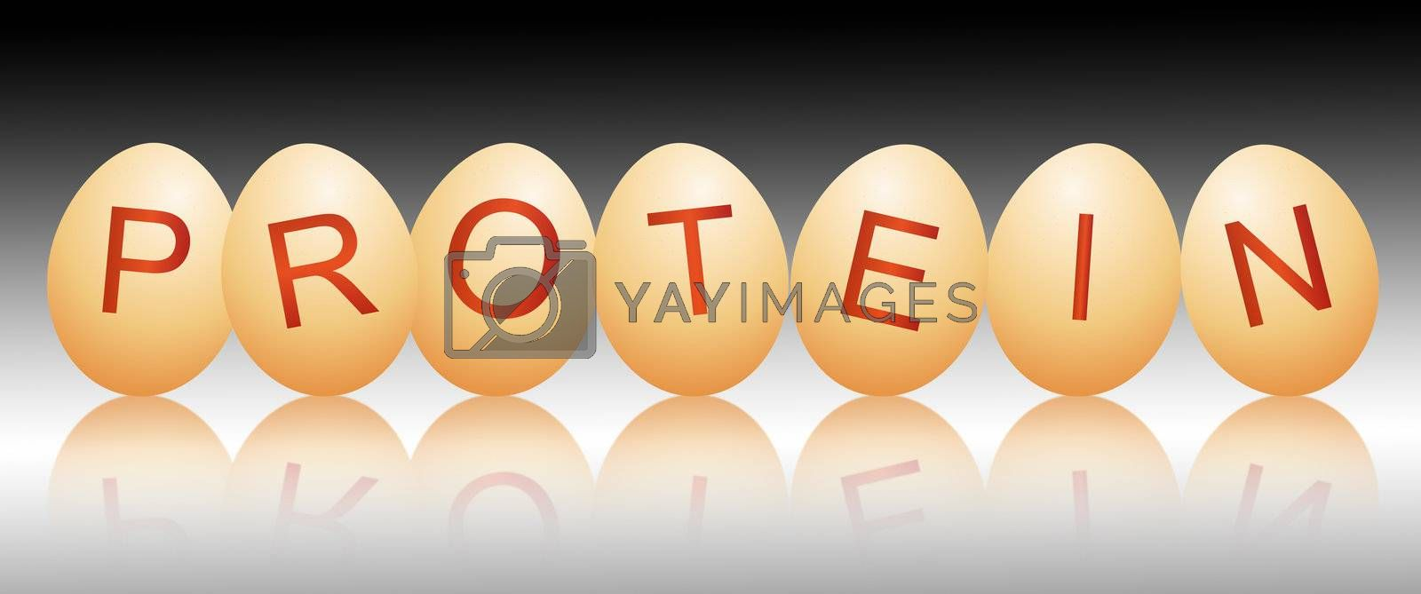 Illustration depicting a row of chicken eggs with letters spelling the word PROTEIN arranged over black and grey and reflecting into the foreground.