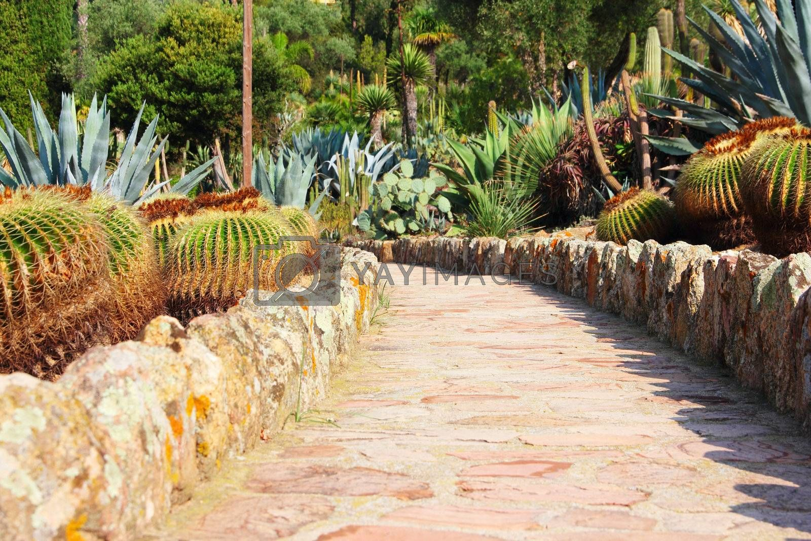 Road in cultivated cactus garden, Spain