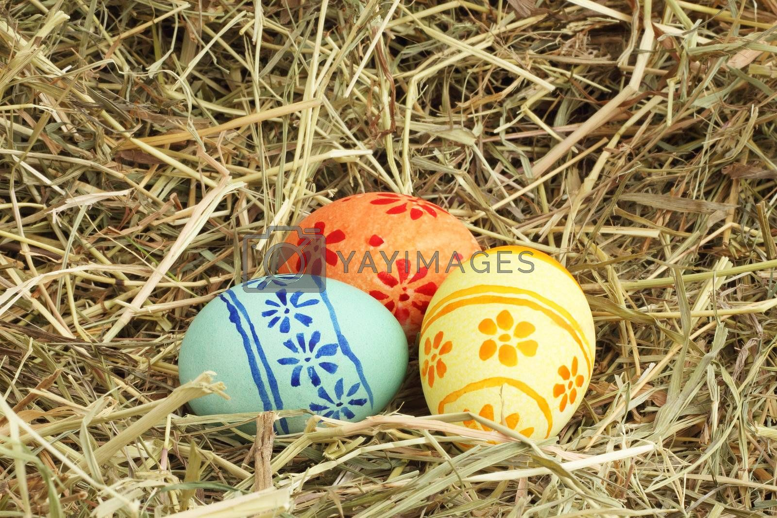 Three colored Easter eggs on hay at sunny day