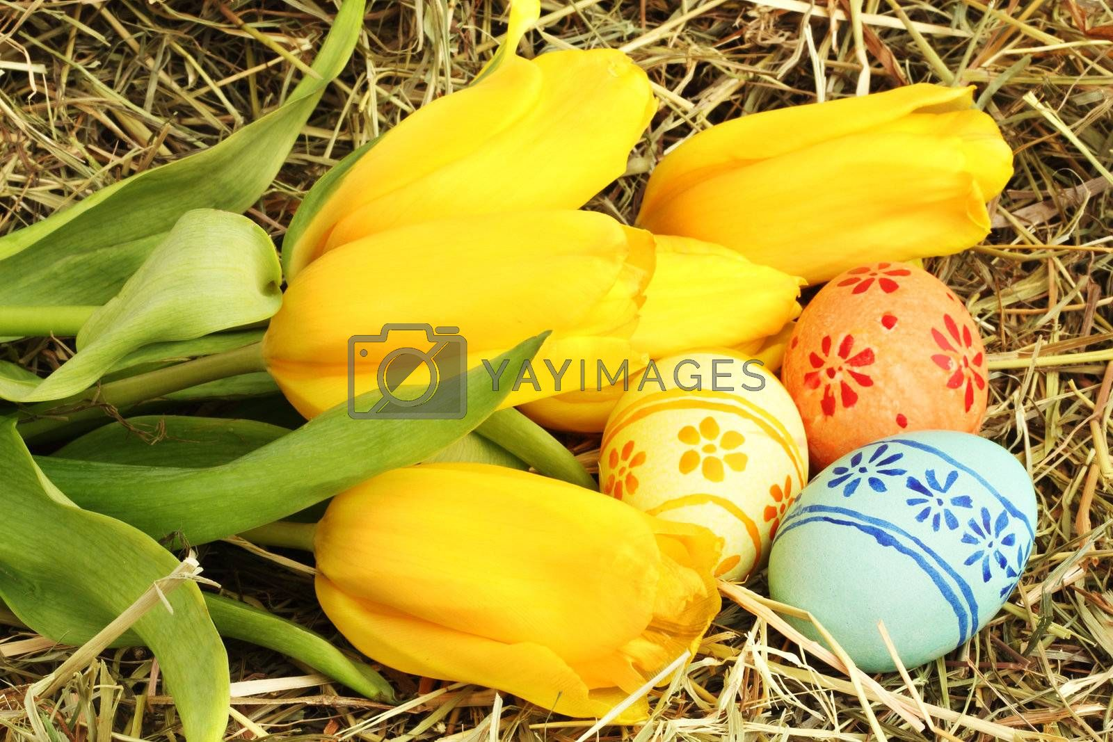 Colored easter eggs and yellow  tulips on hay
