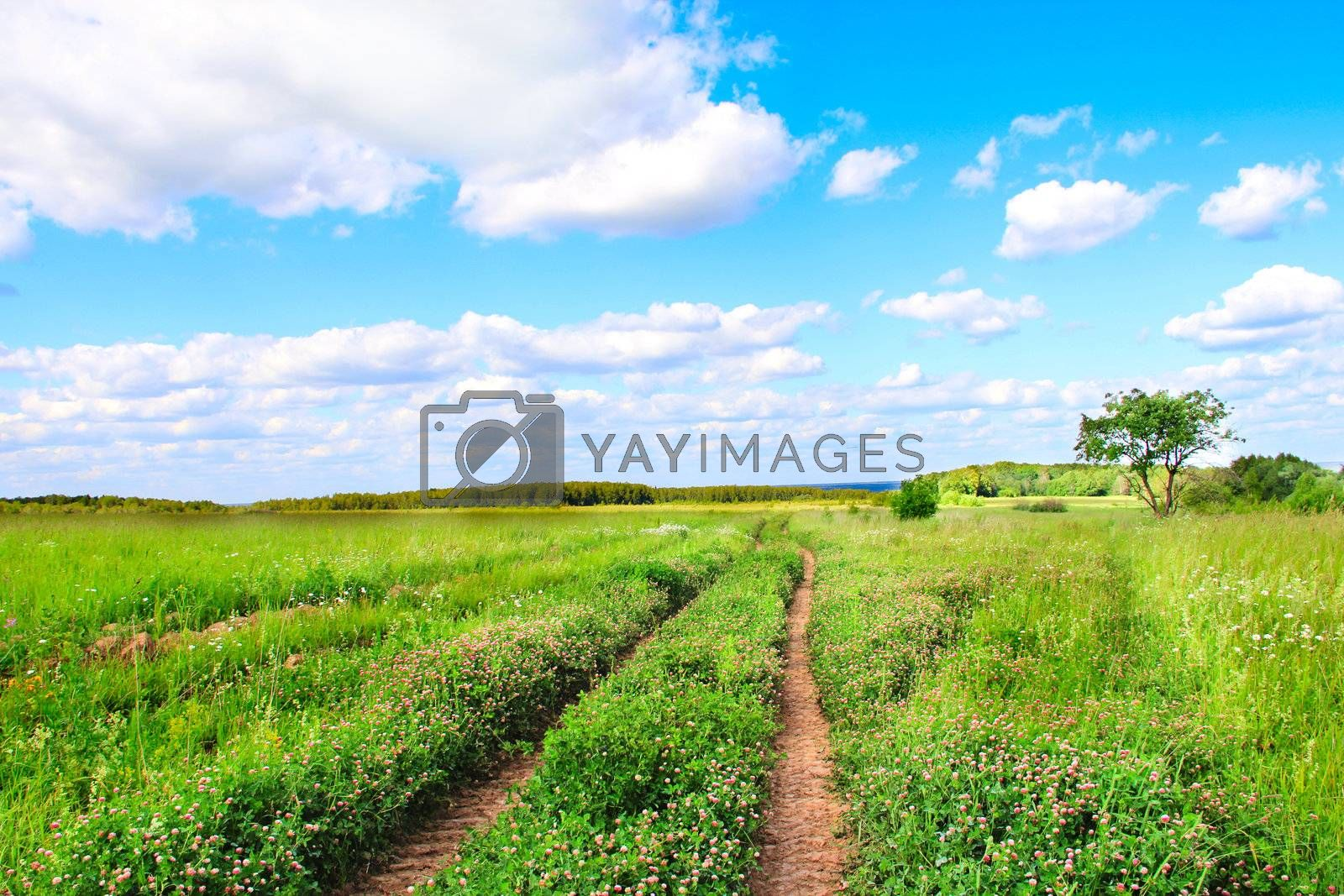 Road in countryside on plain field between clover flowers
