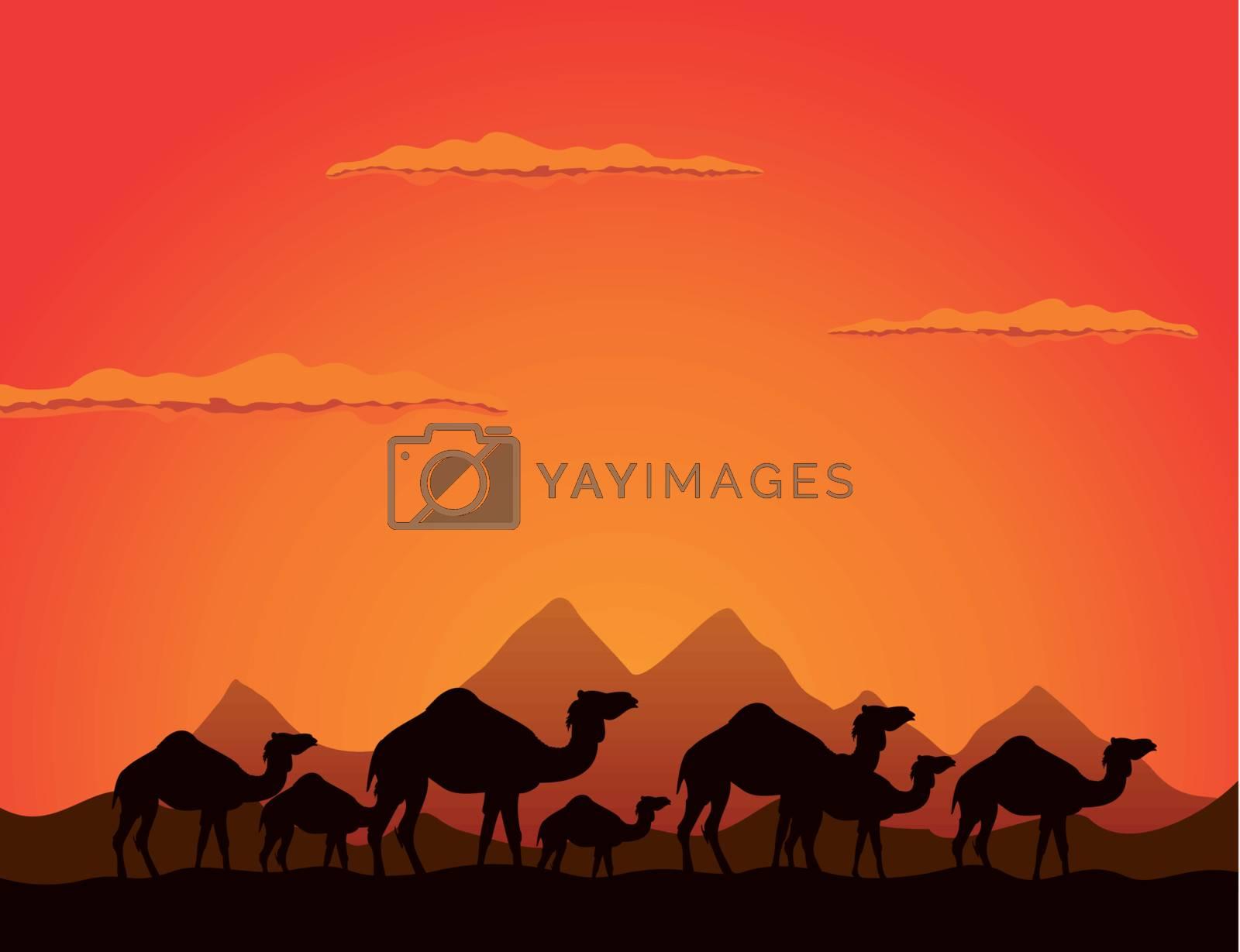 Caravan of camels go on deserts. A vector illustration