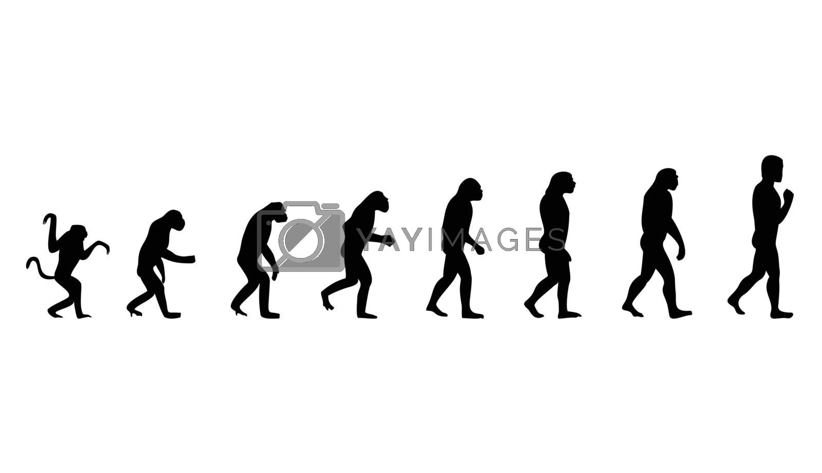 Evolution from a monkey to the person. A vector illustration